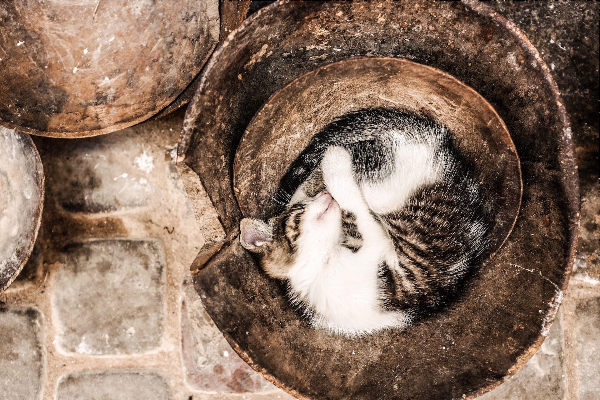 γάτα, ύπνου, Κατοικίδιο ζώο, vasija, Μονάδα - Wallpapers HD - Professor-falken.com