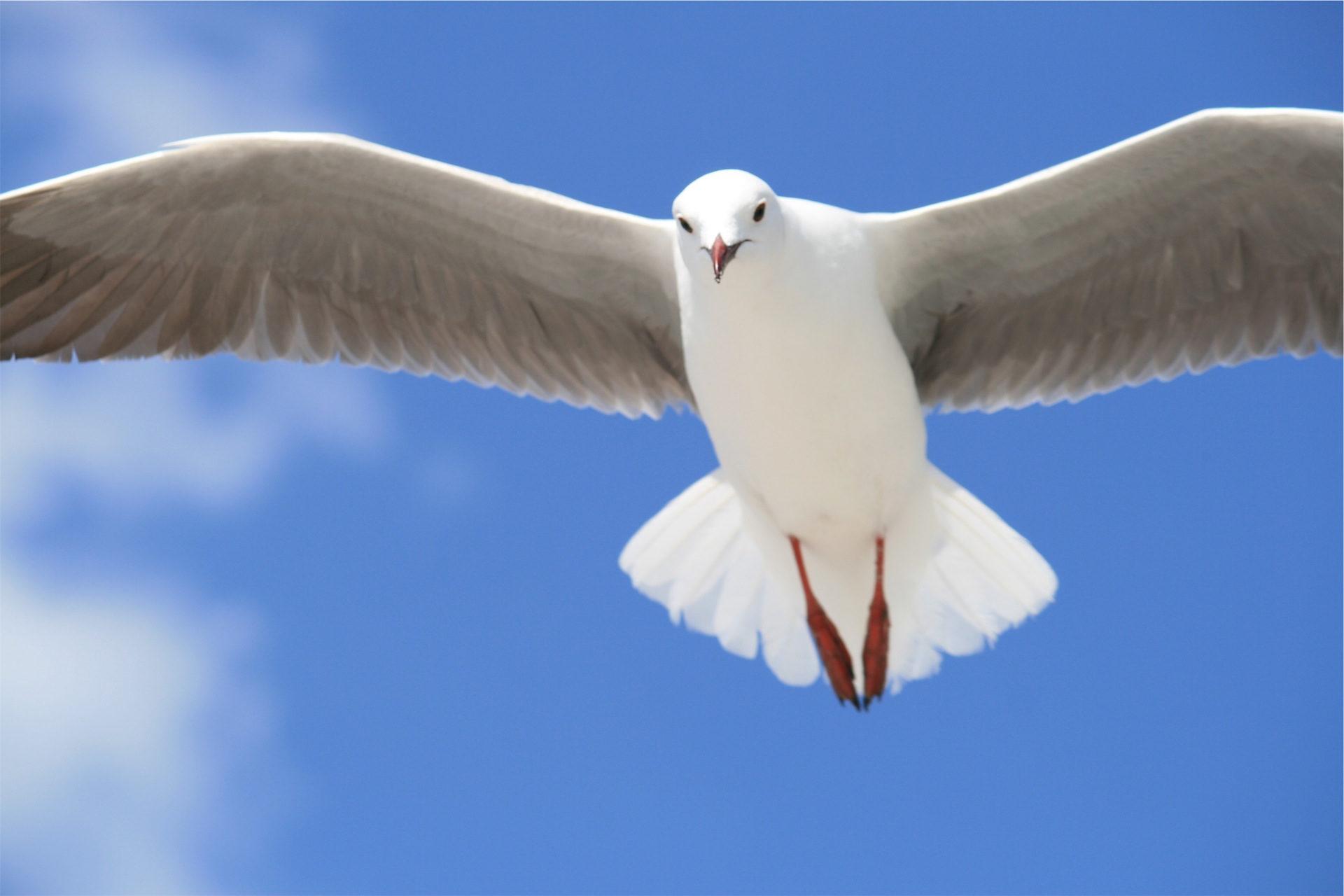 海鸥, 翅膀, 飞行, 大道, 天空 - 高清壁纸 - 教授-falken.com