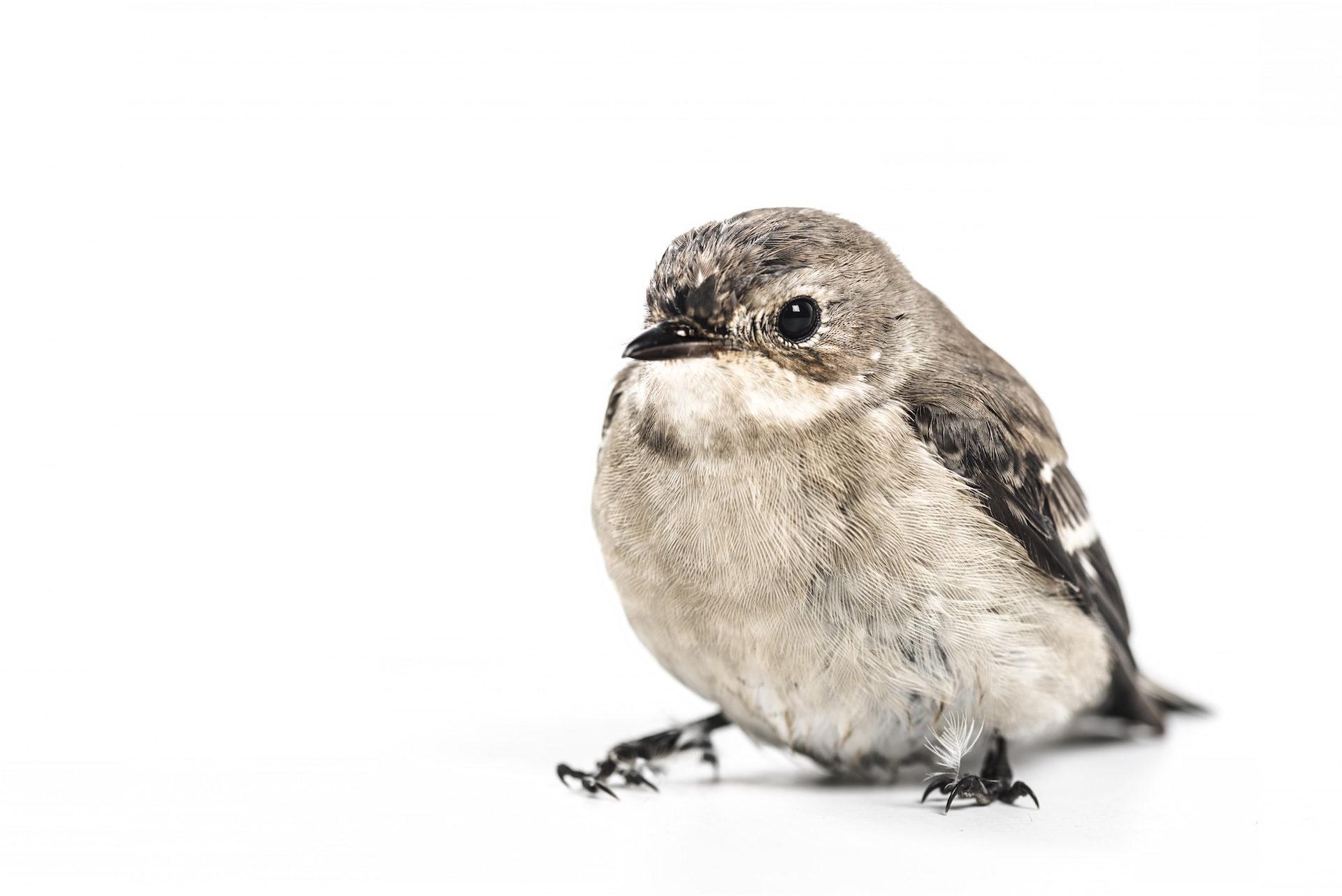 Pardal, Pássaro, Olha, olhos, plumagem - Papéis de parede HD - Professor-falken.com