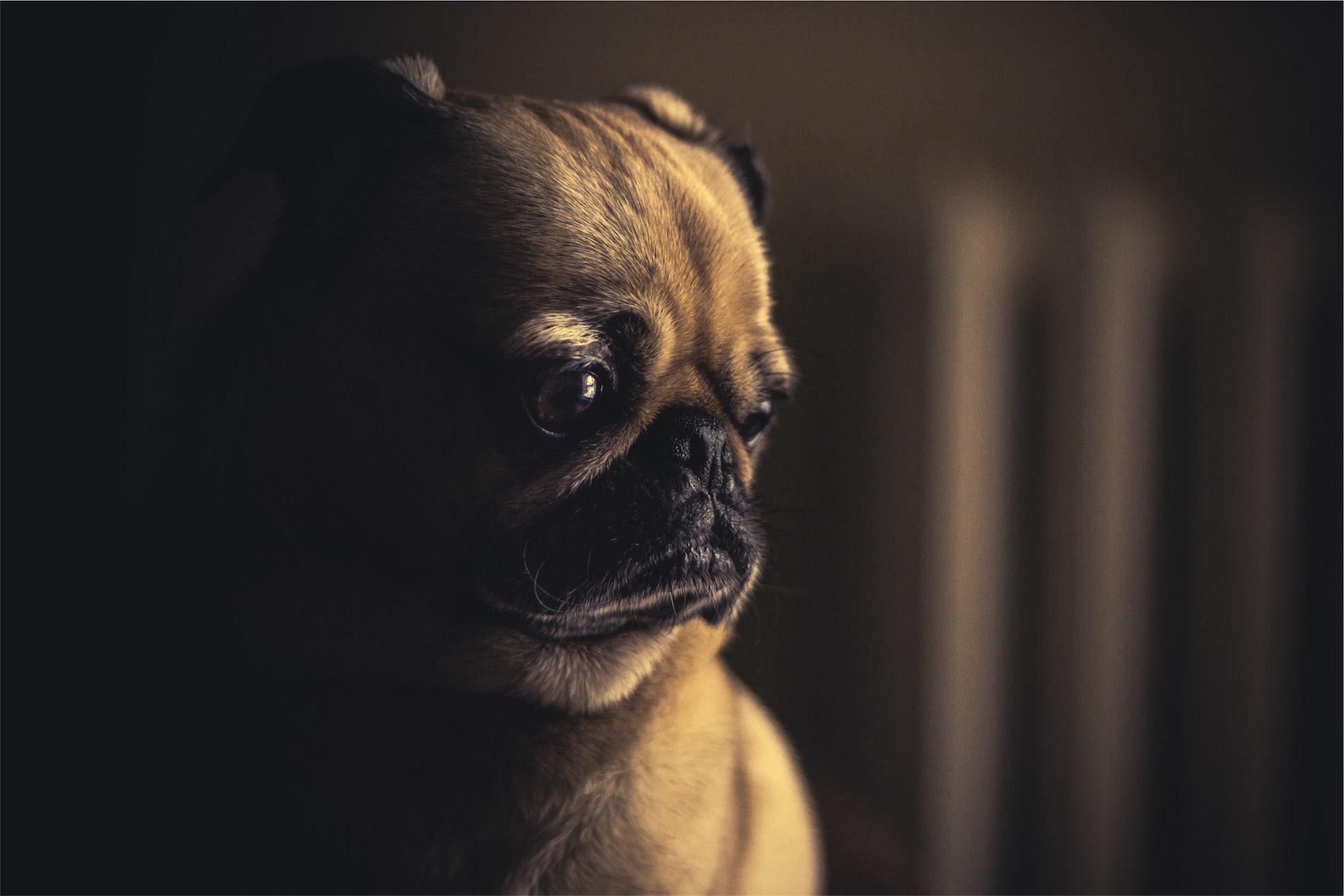 perrito dark