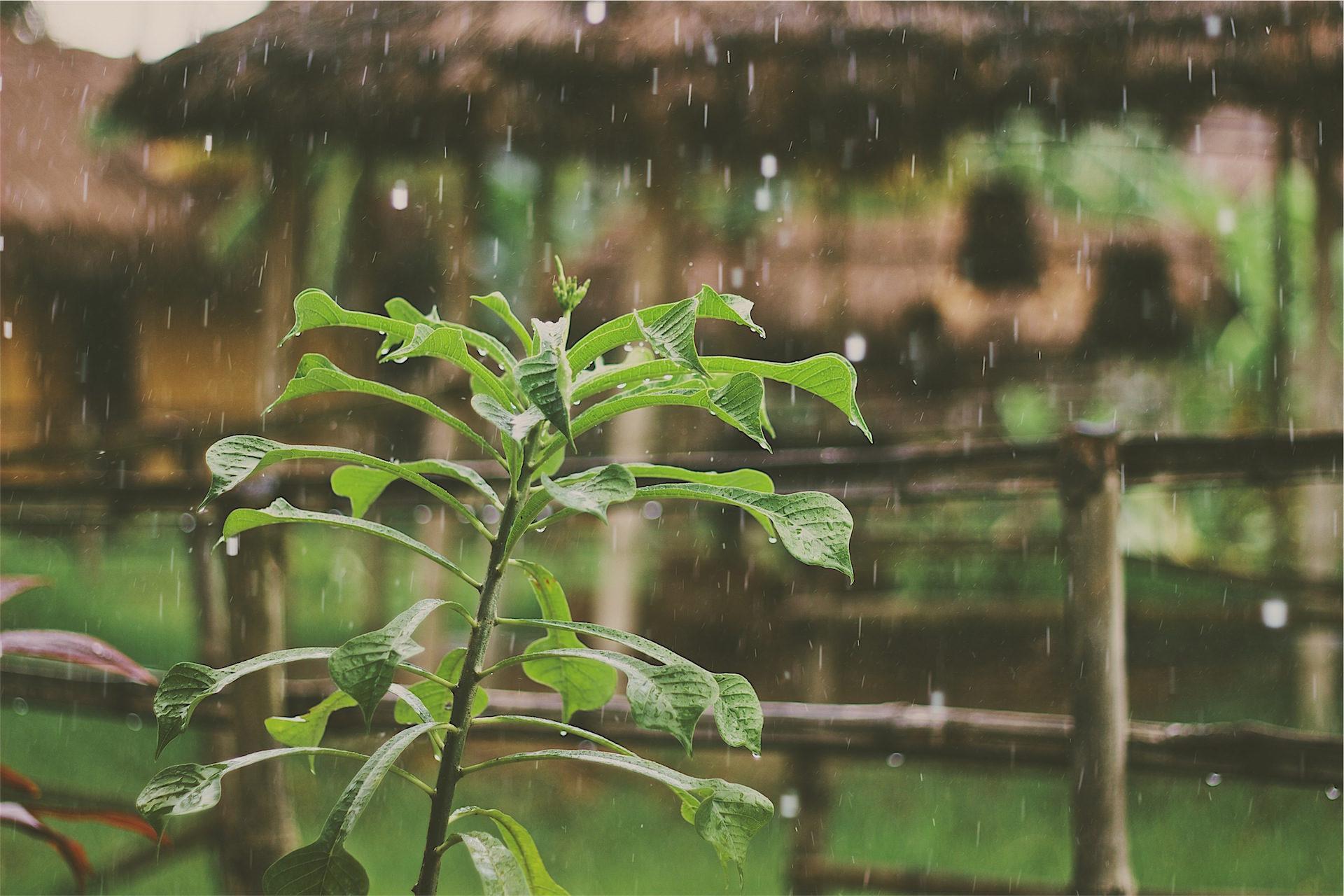 planta, lluvia, tallo, agua, supervivencia - Fondos de Pantalla HD - professor-falken.com