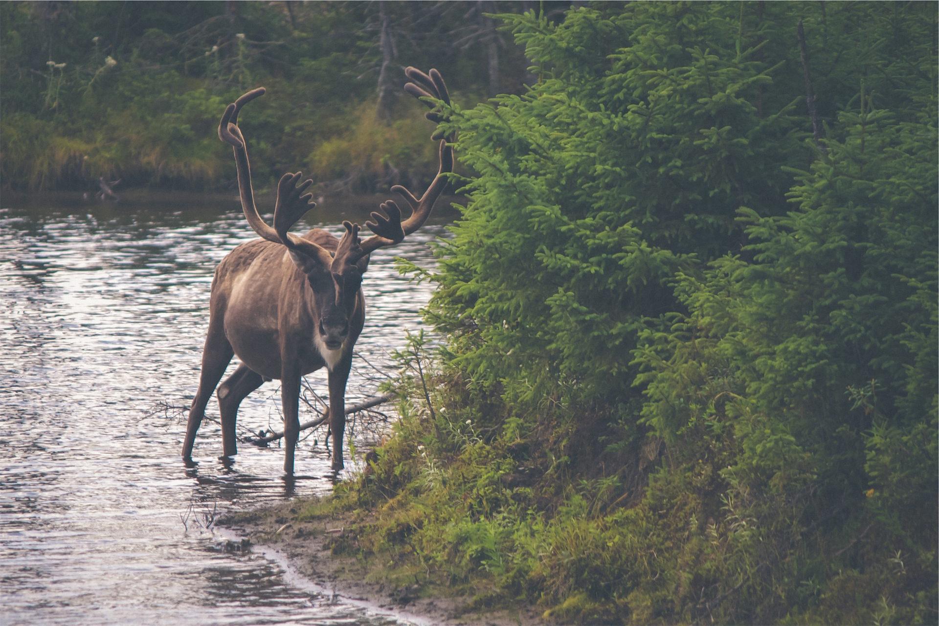 reno, नदी, वन, देखो, ग्रीन - HD वॉलपेपर - प्रोफेसर-falken.com