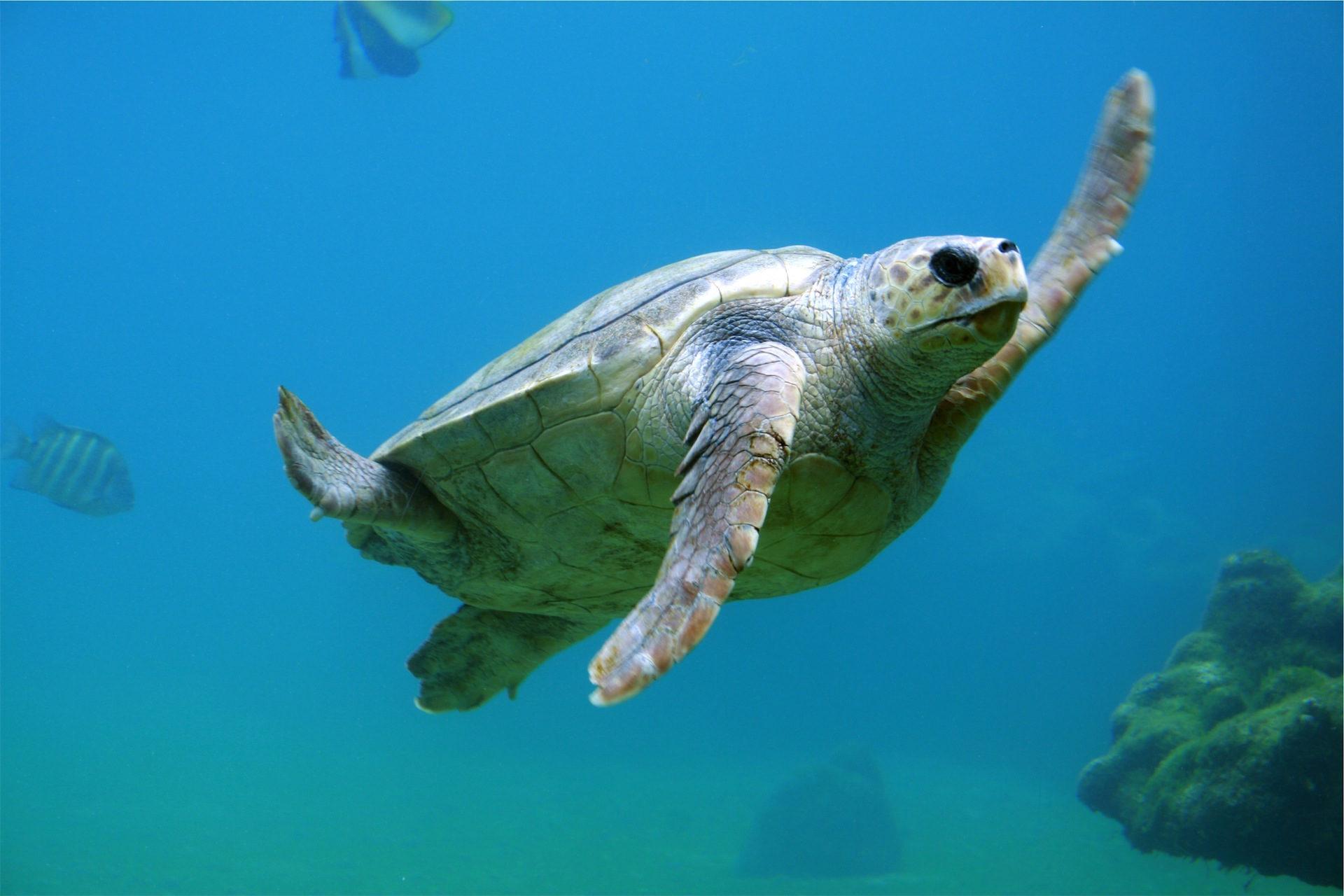 Schildkröte, Unterwasser, Meer, Ozean, Marino - Wallpaper HD - Prof.-falken.com