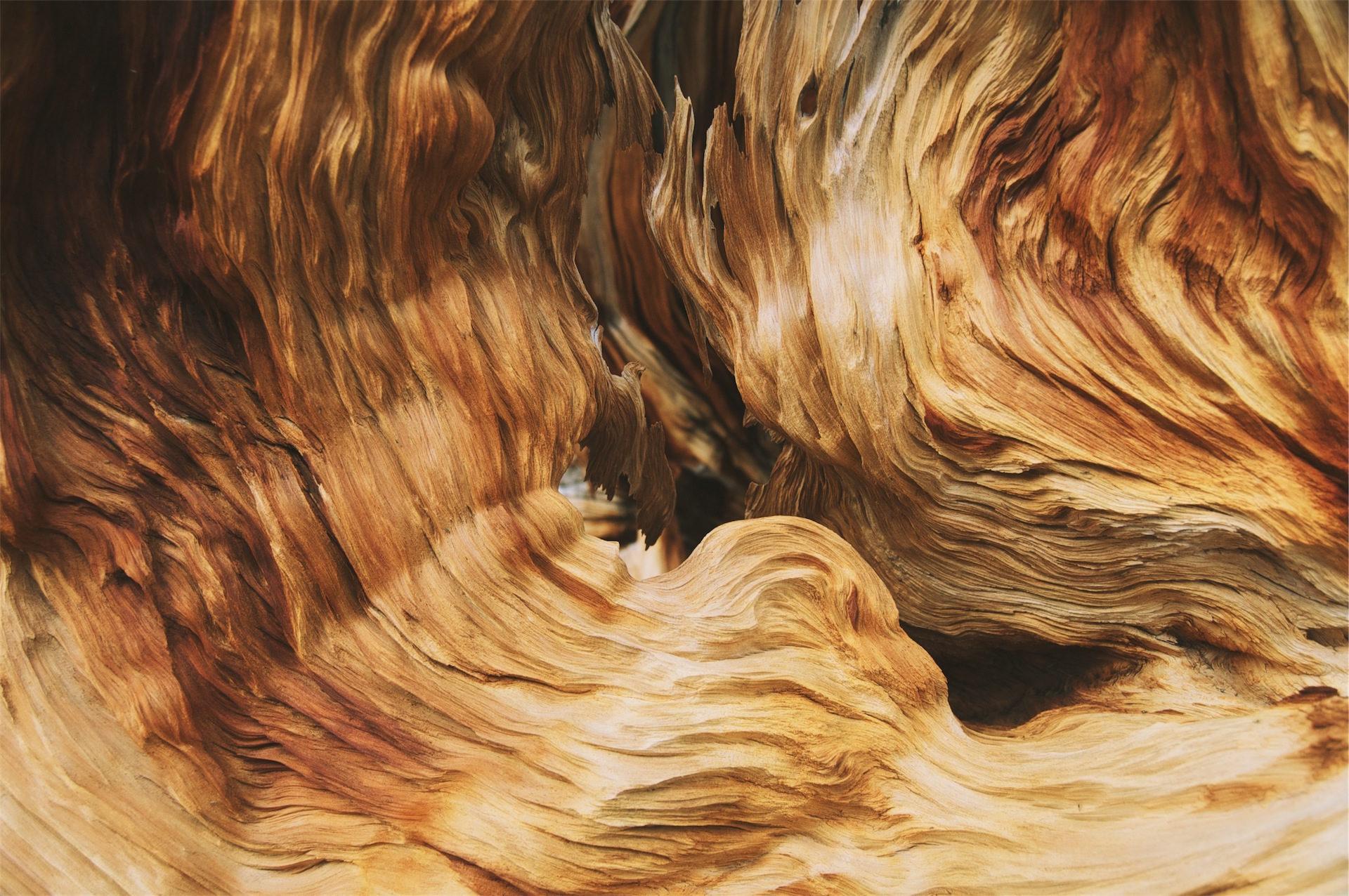 φλέβες, ξύλο, κύματα, πολύχρωμο, κλίση - Wallpapers HD - Professor-falken.com