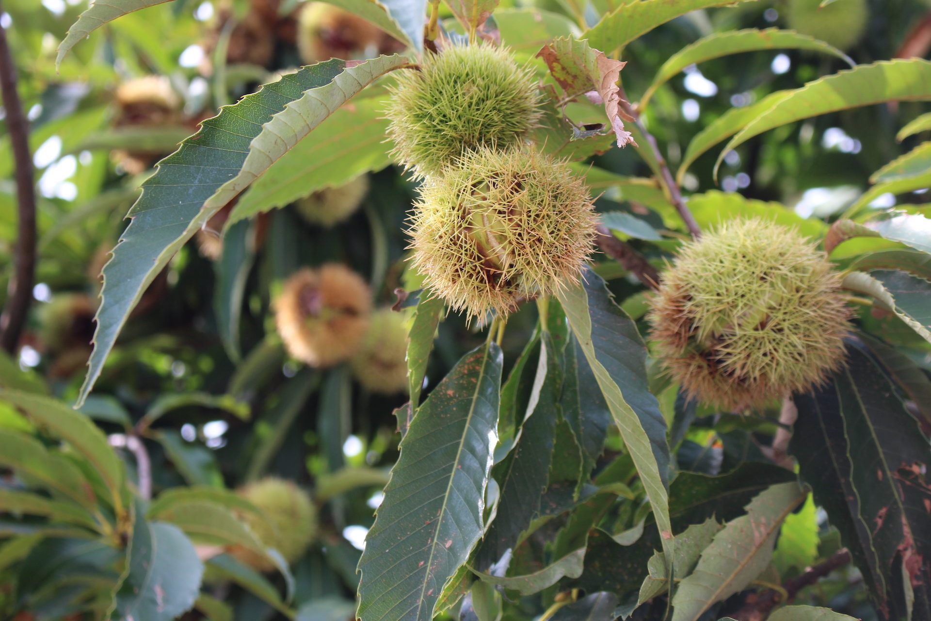 δέντρο, ισόγειο, λουλούδι, Καφέ, φρούτα - Wallpapers HD - Professor-falken.com