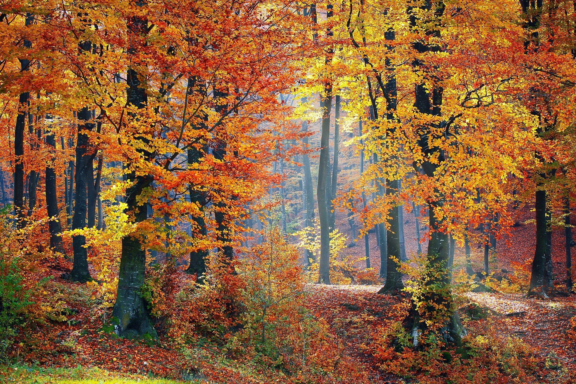 лес, деревья, Осень, листья, сухие - Обои HD - Профессор falken.com