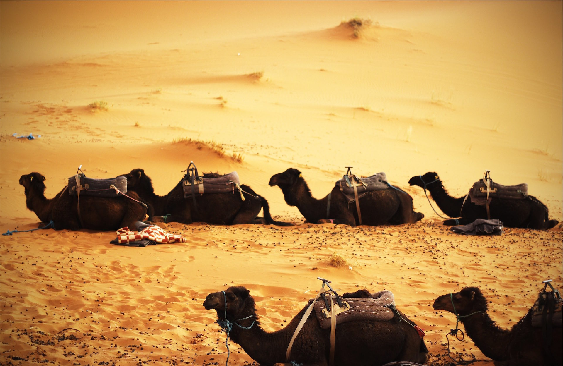 ऊंट, desiertos, dromedarios, रेत, inhóspito - HD वॉलपेपर - प्रोफेसर-falken.com