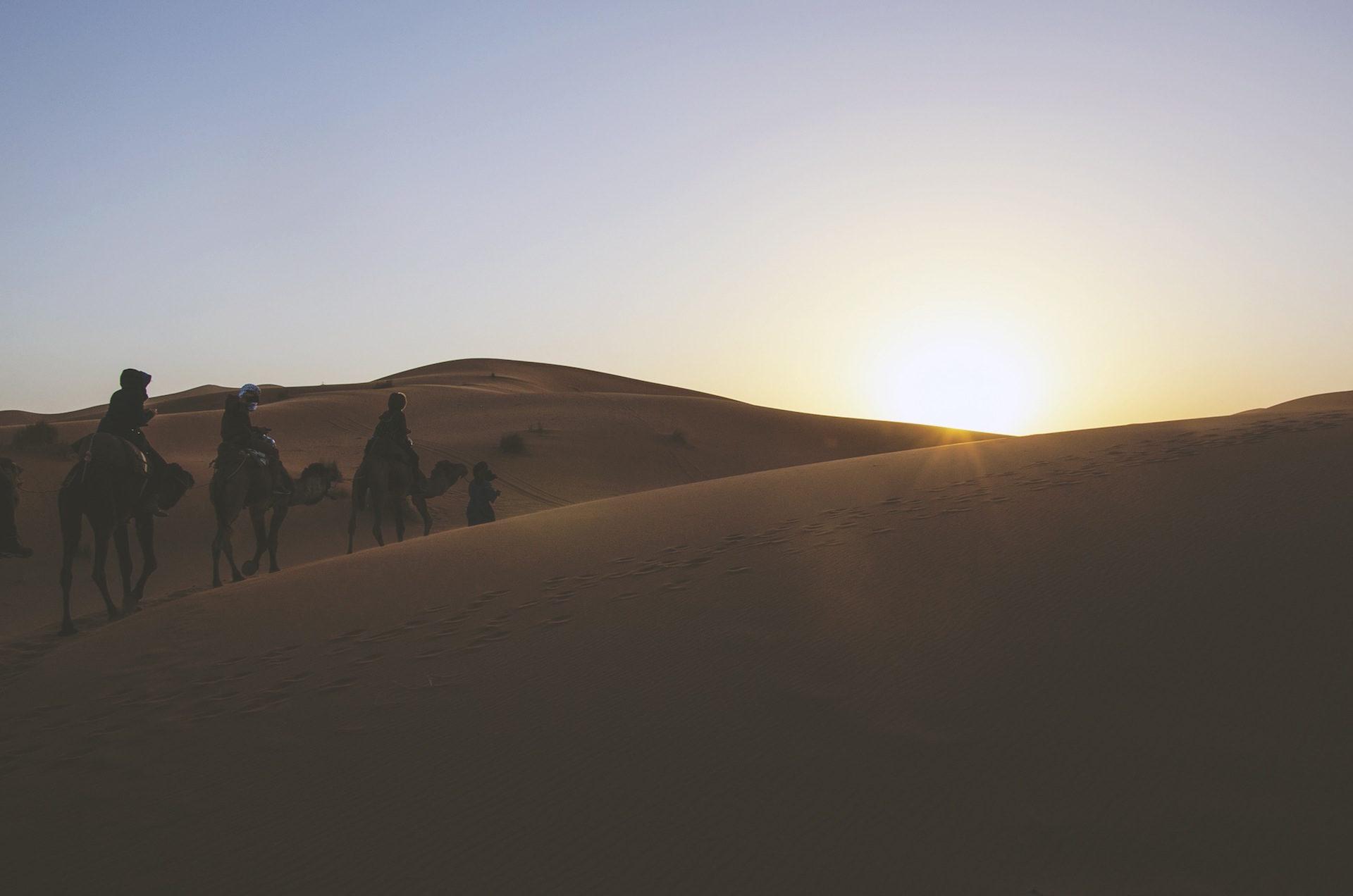 Wüste, Kamele, Sand, Fußstapfen, ,Sonne - Wallpaper HD - Prof.-falken.com