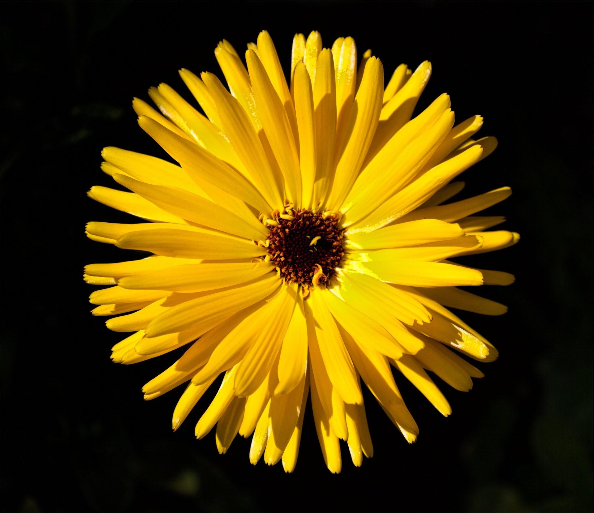 फूल, पंखुड़ियों, पुंकेसर, pistils, पीला - HD वॉलपेपर - प्रोफेसर-falken.com