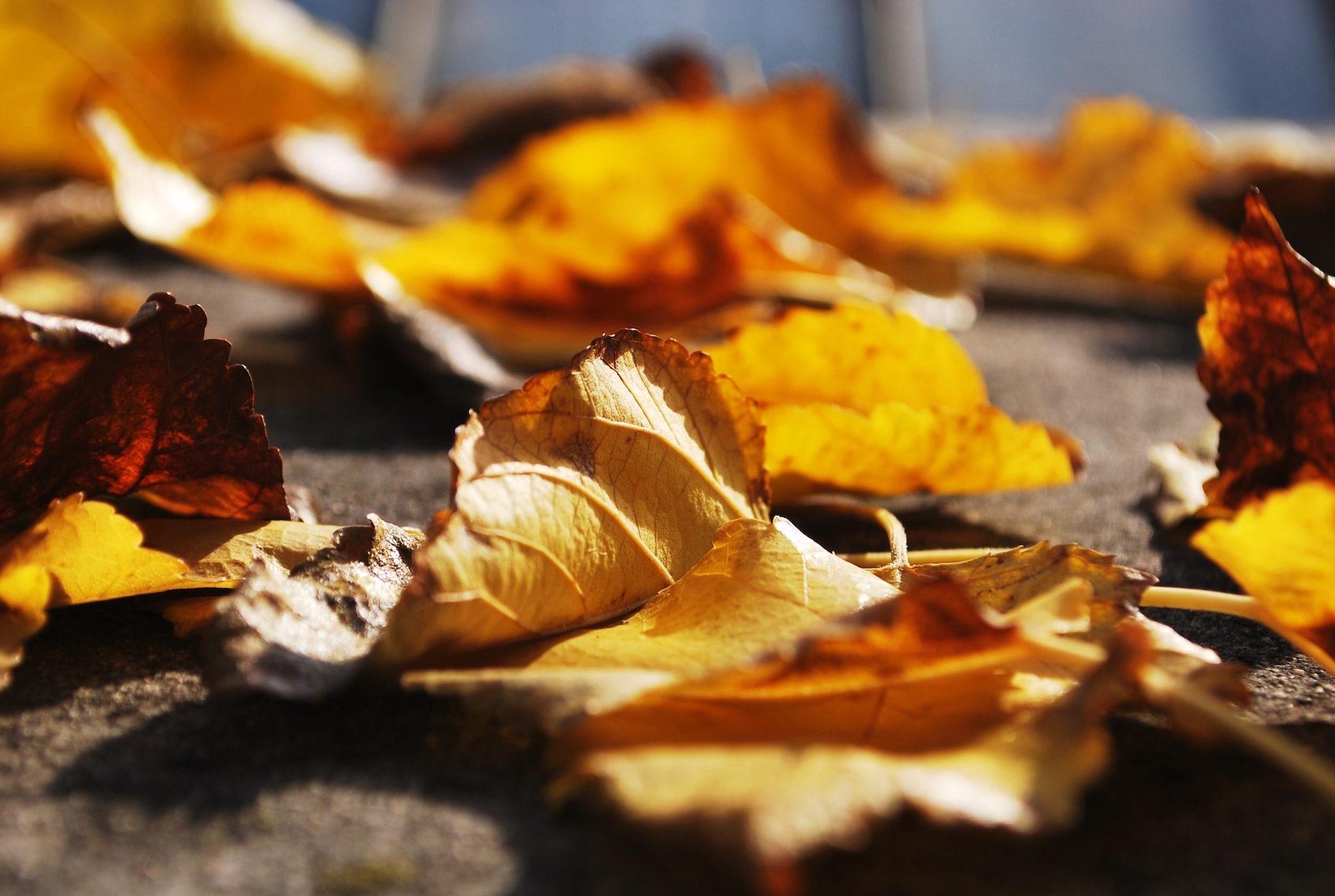 hojas, secas, suelo, otoño, caída - Fondos de Pantalla HD - professor-falken.com