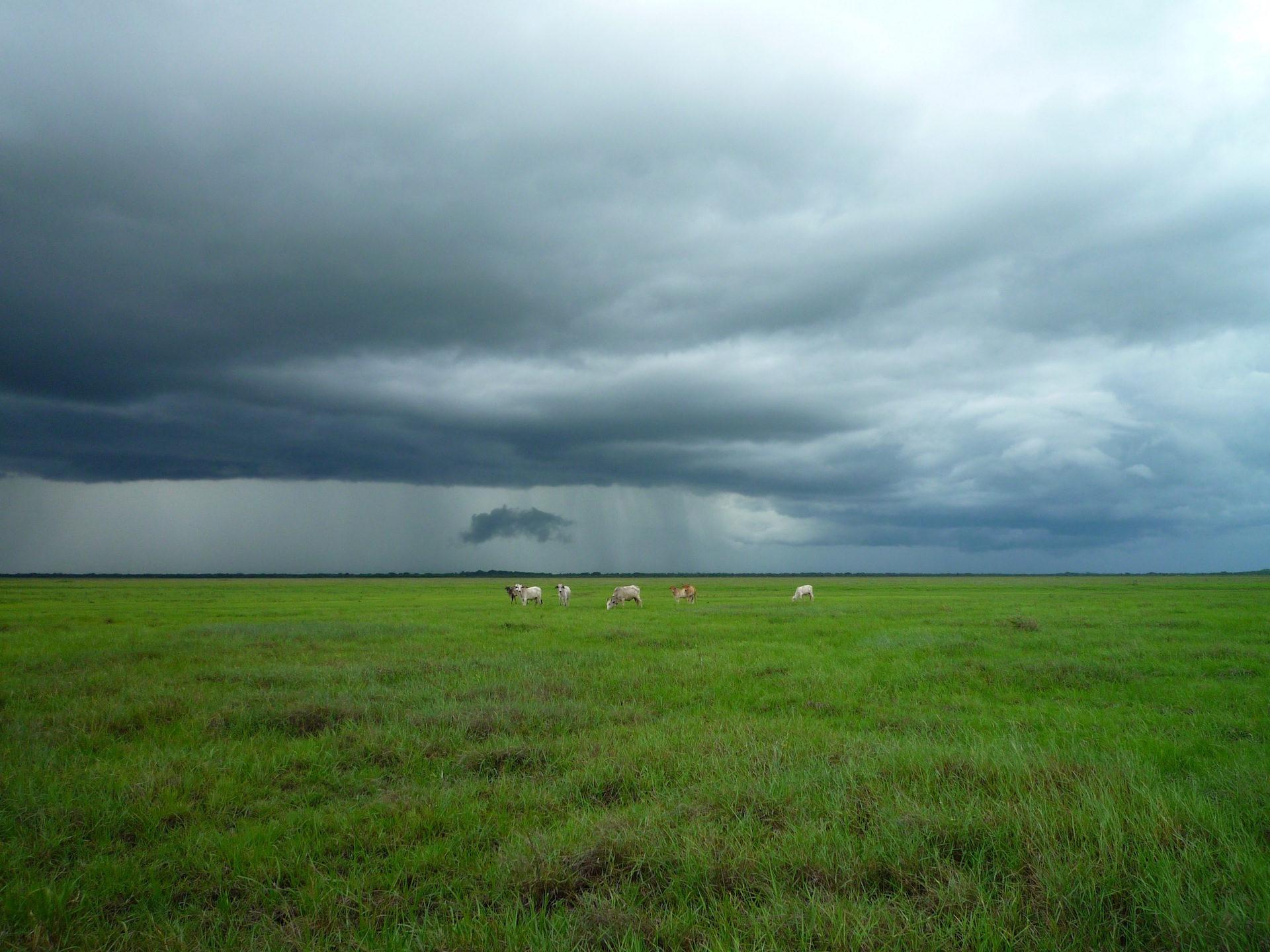 pianura, bestiame, nuvole, Tempesta, temporale - Sfondi HD - Professor-falken.com