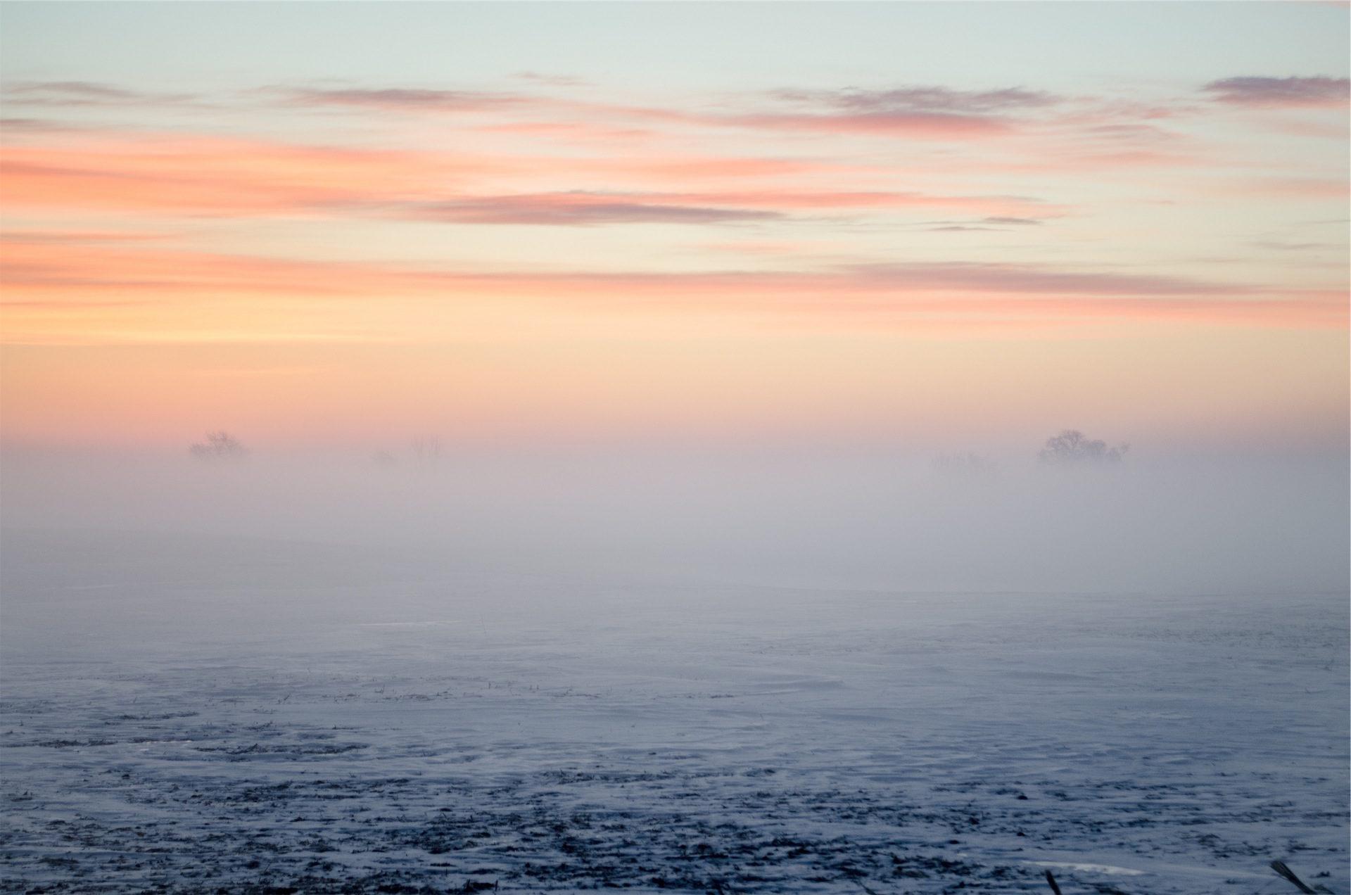 neve, nevoeiro, Rocio, amanhã, Céu, nuvens, Rosas - Papéis de parede HD - Professor-falken.com