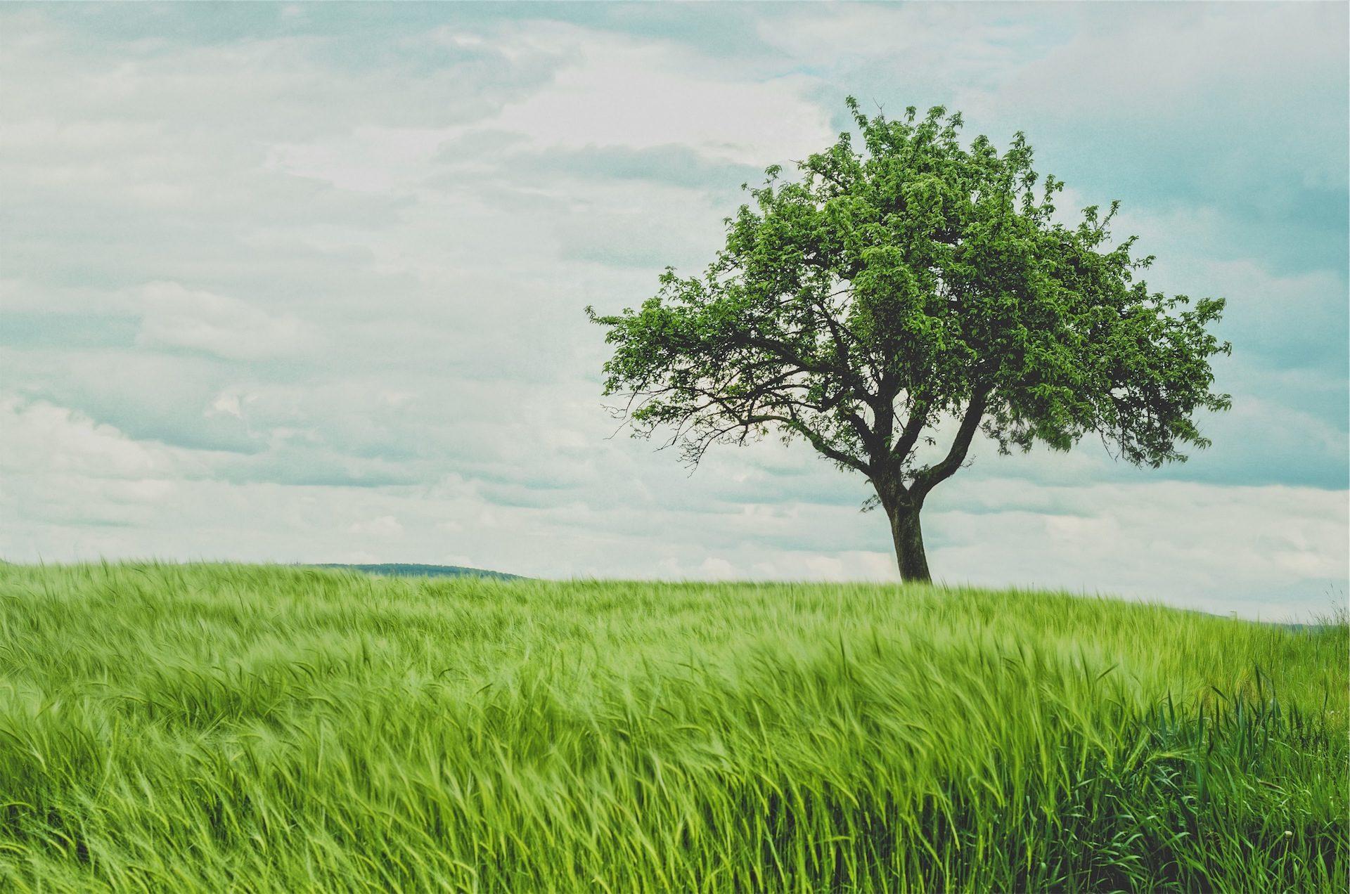 شجرة, سولو, pradera, المرج, العشب, الأخضر - خلفيات عالية الدقة - أستاذ falken.com