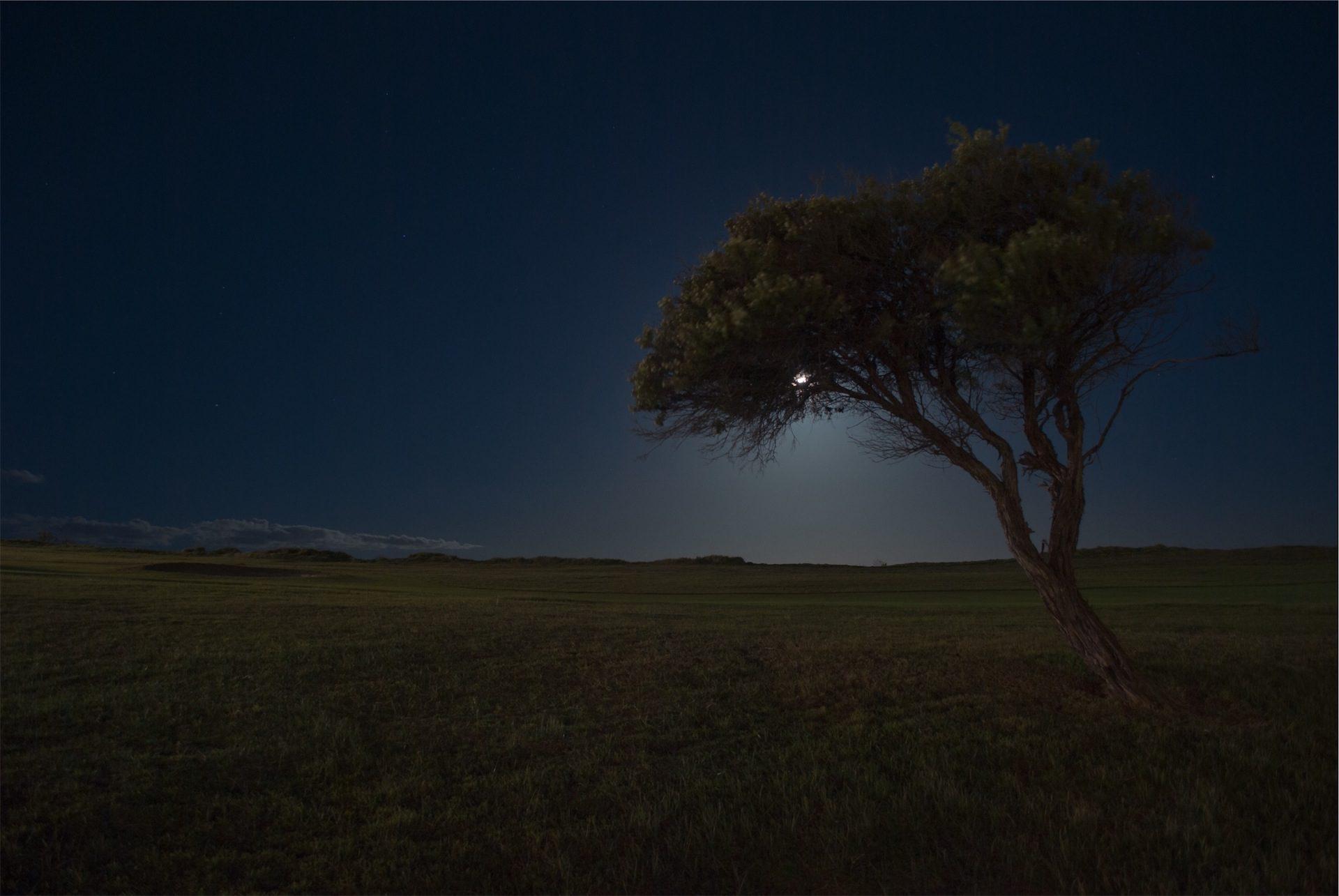 árbol, noche, luna, resplandor, soledad - Fondos de Pantalla HD - professor-falken.com