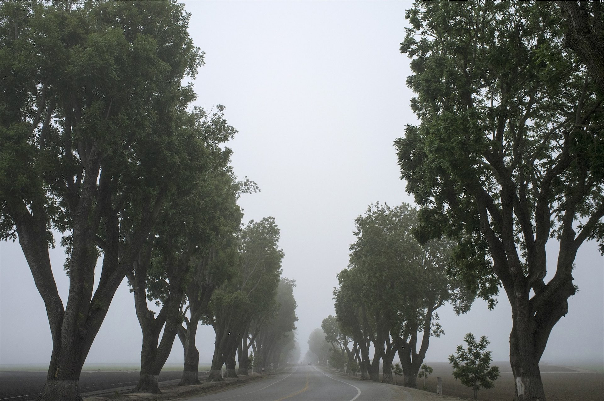 arbres, carretera, brouillard, aube, Route - Fonds d'écran HD - Professor-falken.com