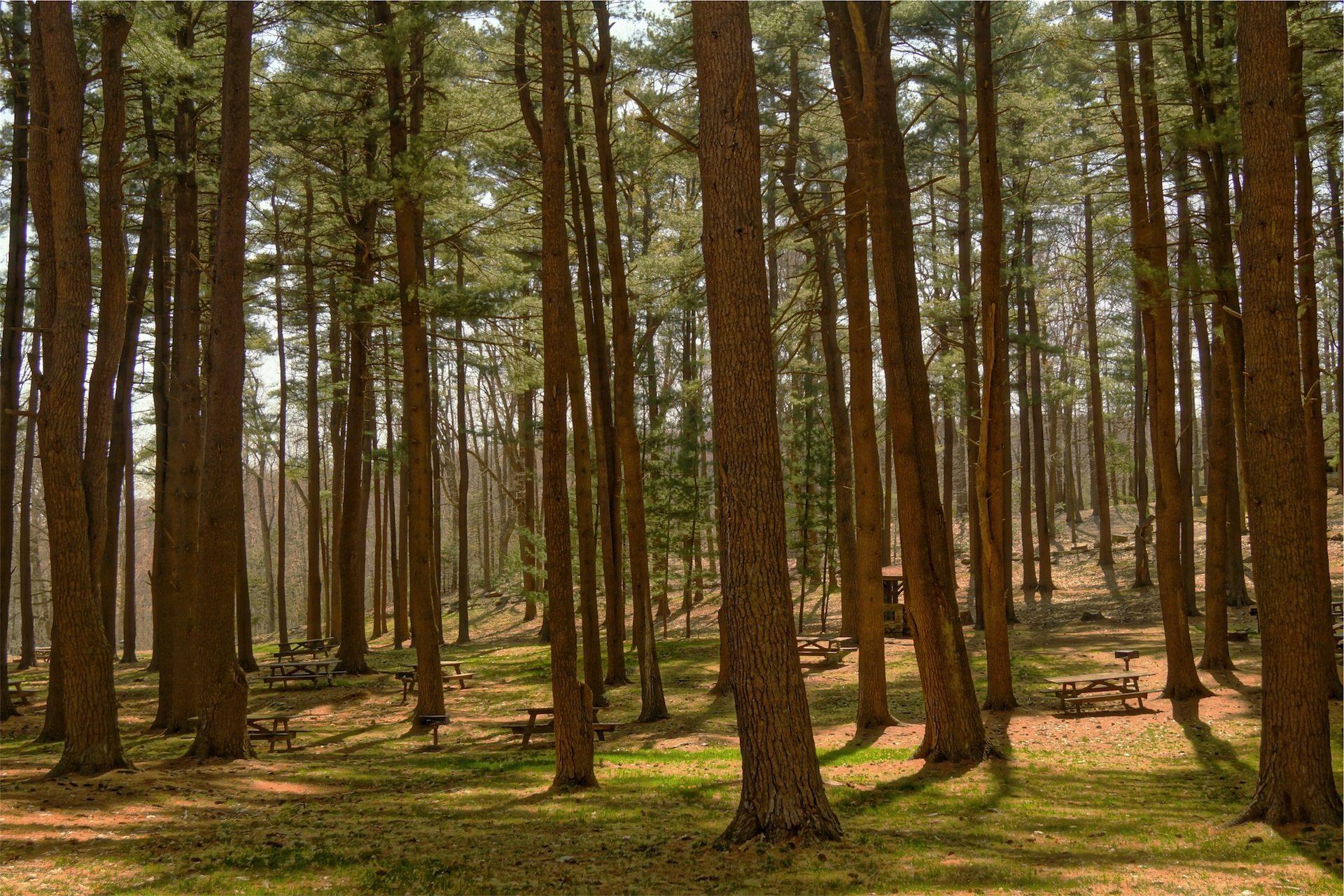 森林, 树木, 字段, 野餐区, 座位 - 高清壁纸 - 教授-falken.com