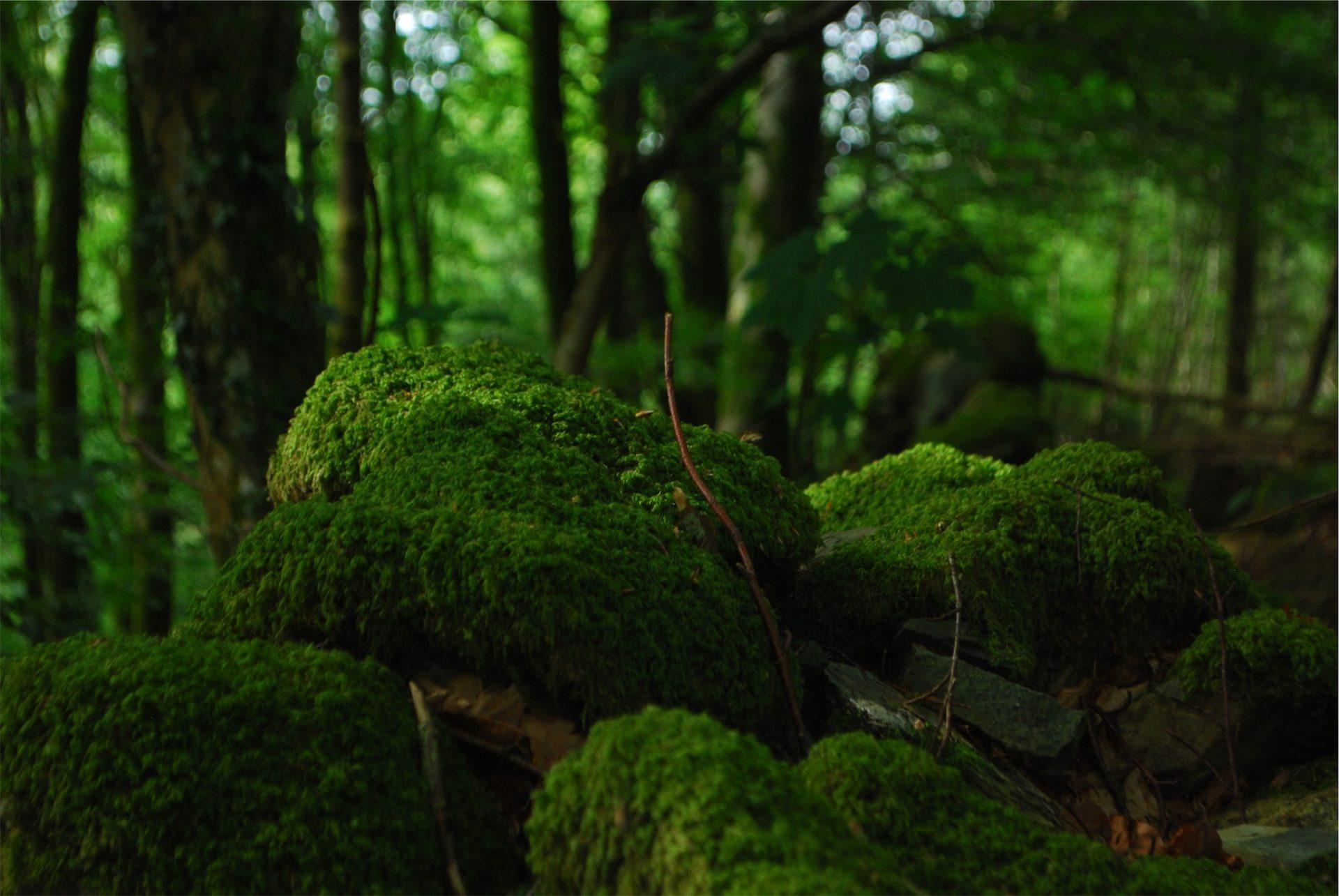 Wald, Unkraut, MOOS, Flora, Grün - Wallpaper HD - Prof.-falken.com