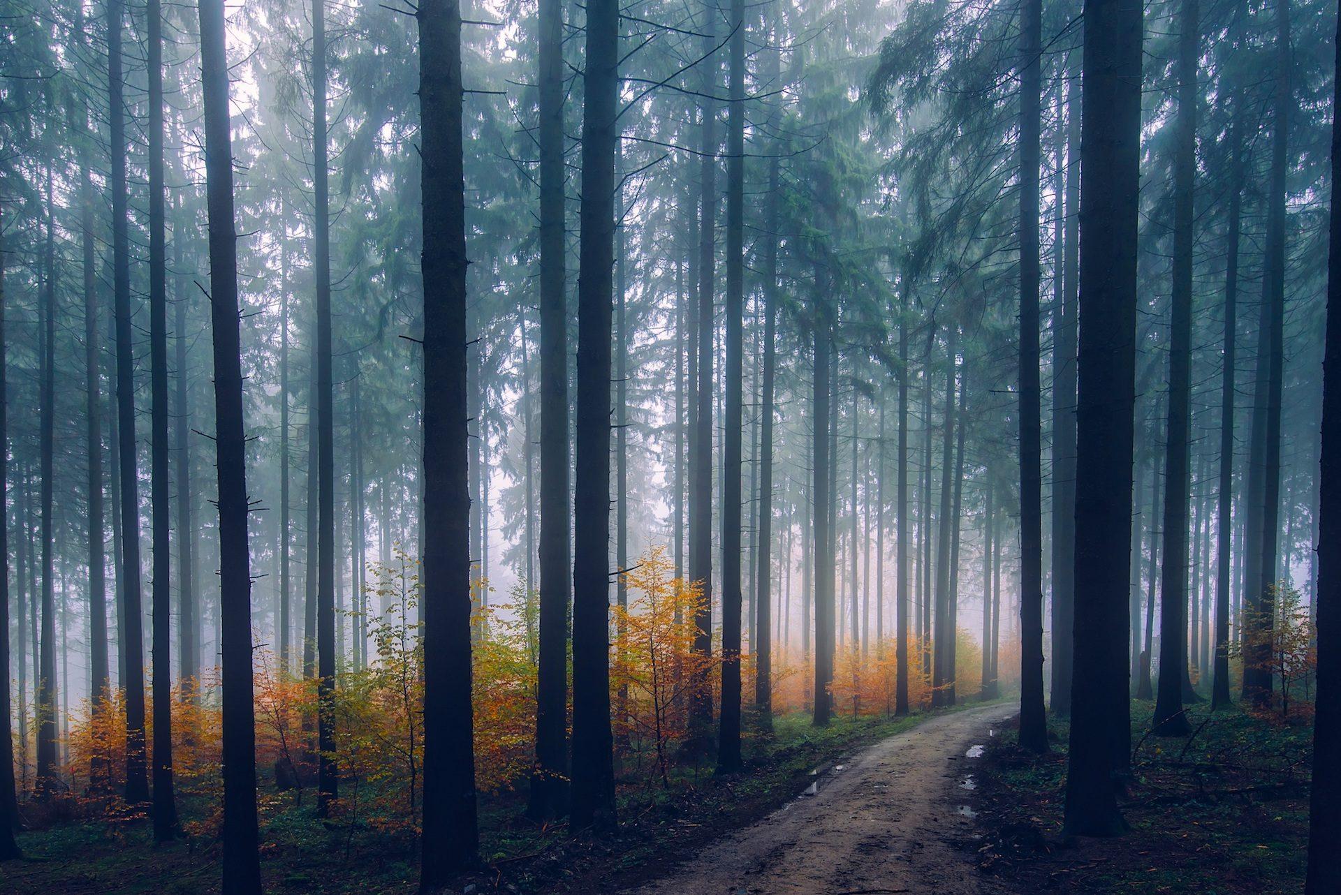 лес, туман, Осень, Тропа, Дорога, деревья - Обои HD - Профессор falken.com