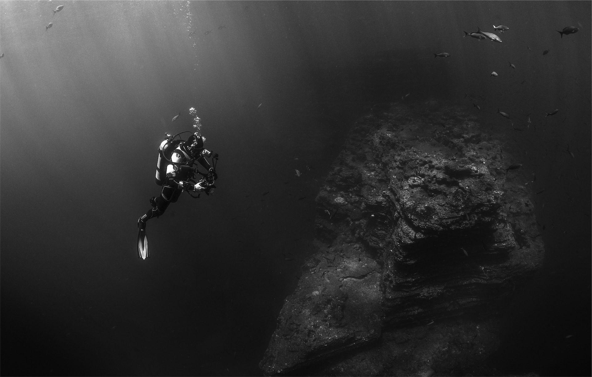 Operatore subacqueo, Roca, pesce, fauna, Marina, in bianco e nero - Sfondi HD - Professor-falken.com