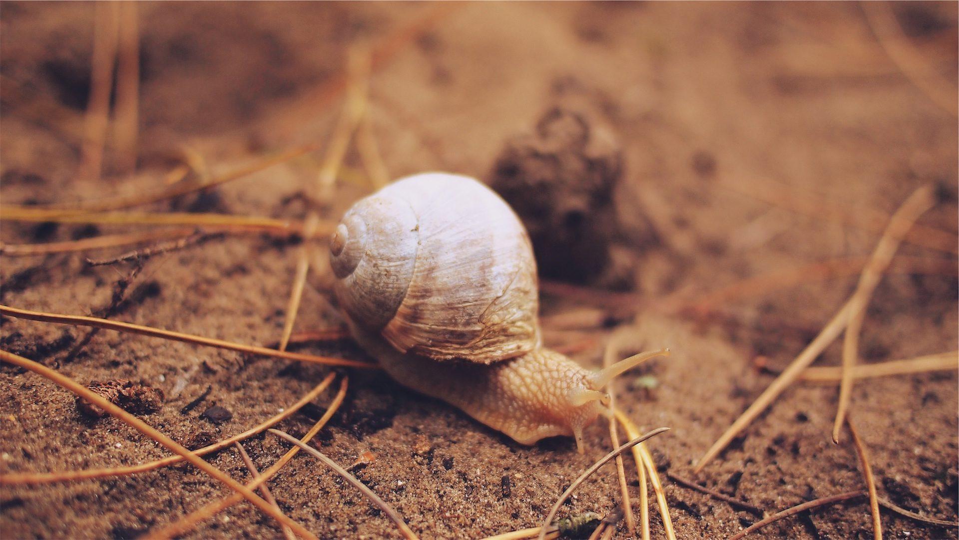 lumaca, Shell, Casa, lento, Terra - Sfondi HD - Professor-falken.com