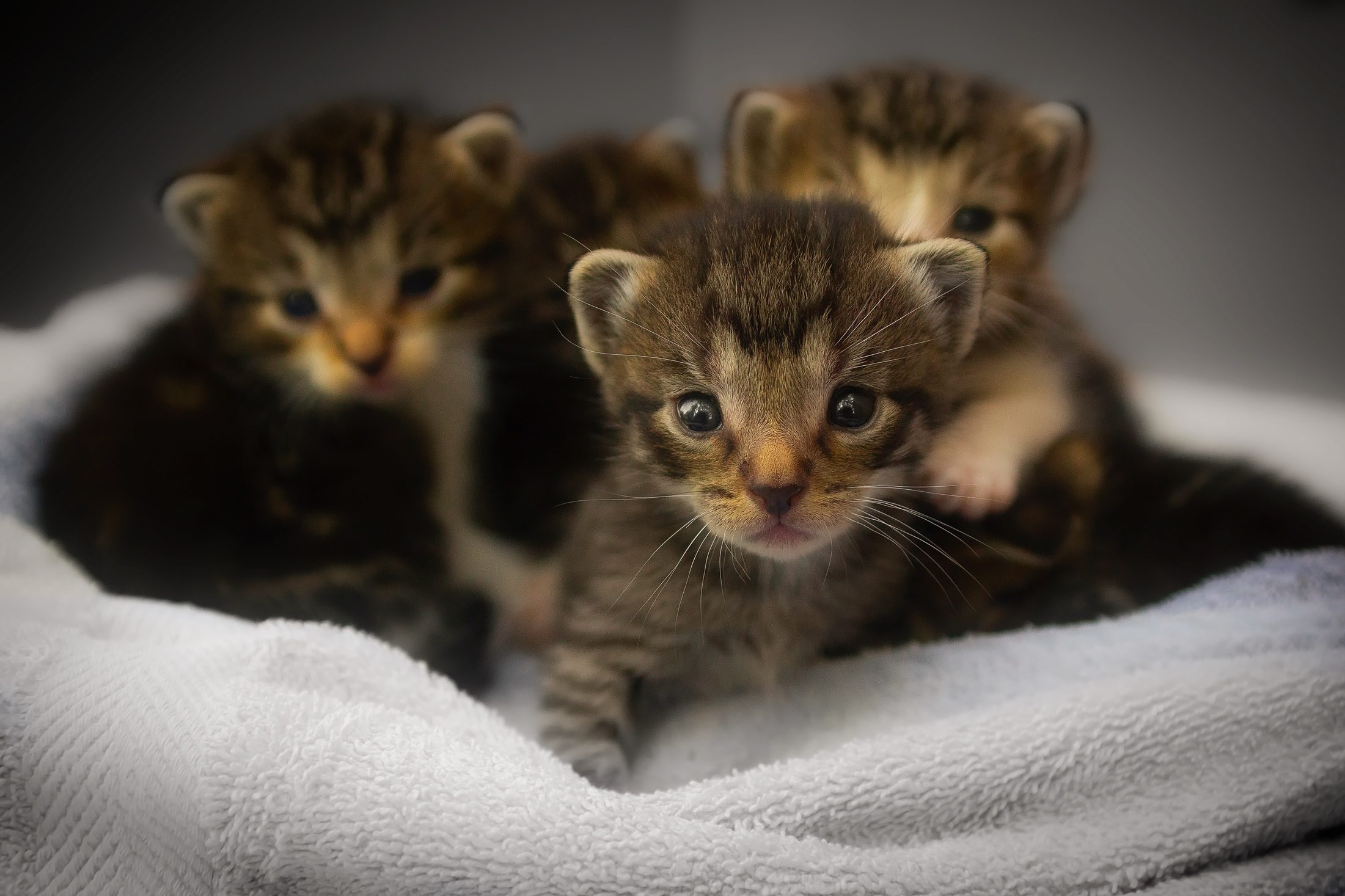 gatinhos, pequeno, gatos, jovem, Olha, olhos - Papéis de parede HD - Professor-falken.com