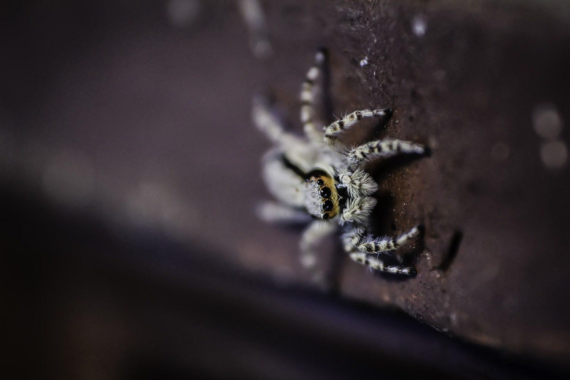 Insekt, araña, Spinne, gruselig, Angst, Panik - Wallpaper HD - Prof.-falken.com