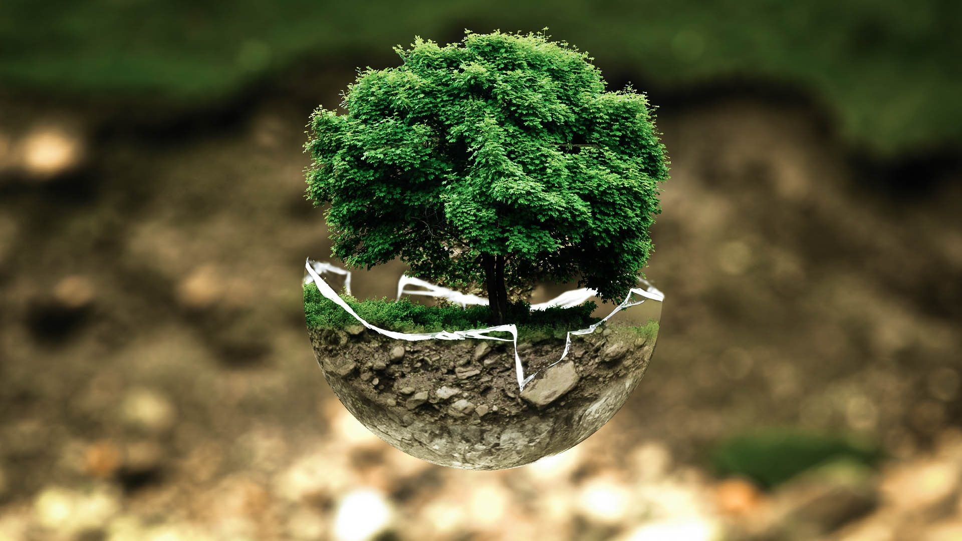 medio, ambiente, atmósfera, fragilidad, ecosistema, árbol - Fondos de Pantalla HD - professor-falken.com