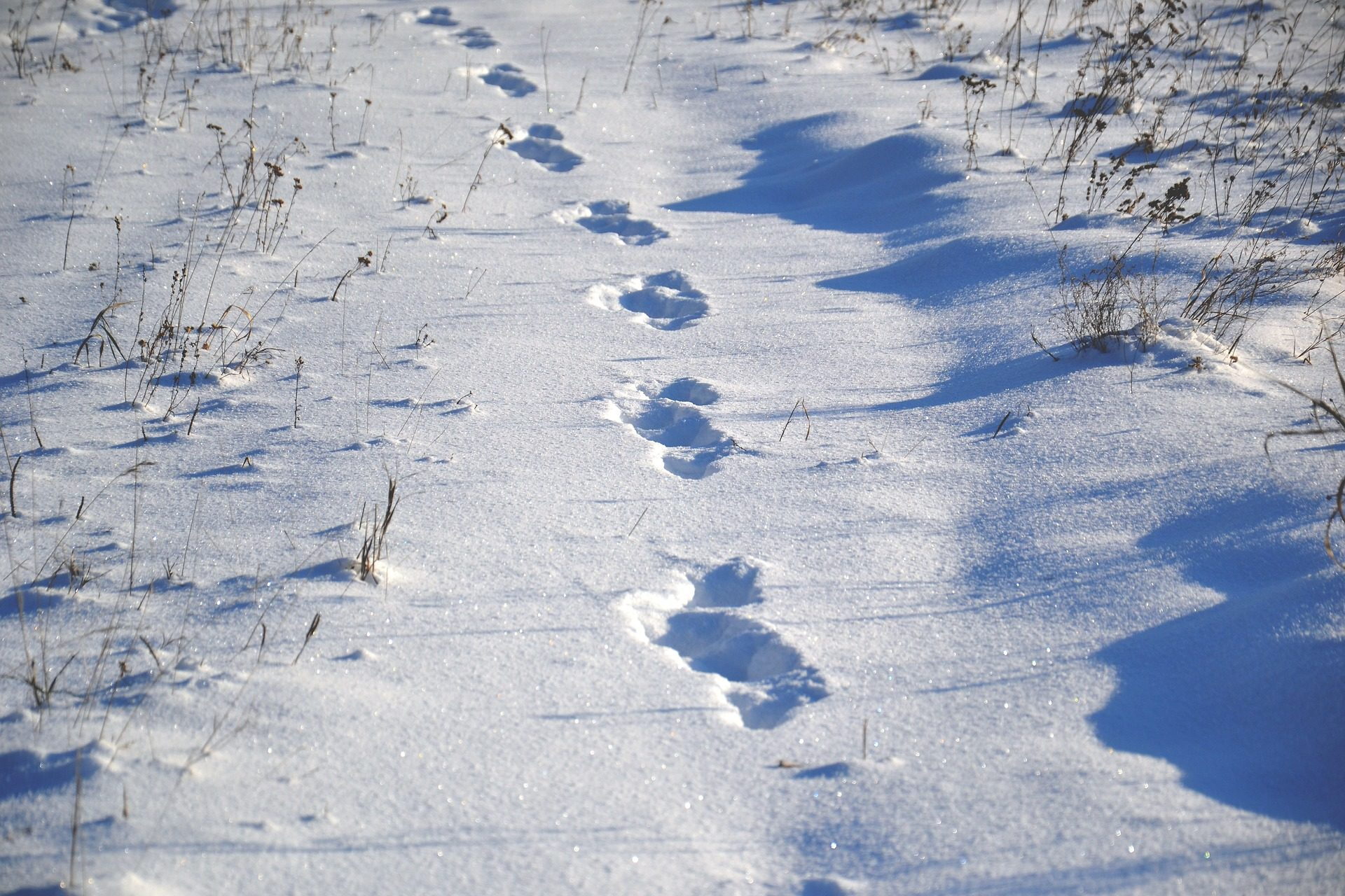 雪, 线索, 道路, 脚步声, 内华达州, 冬天 - 高清壁纸 - 教授-falken.com