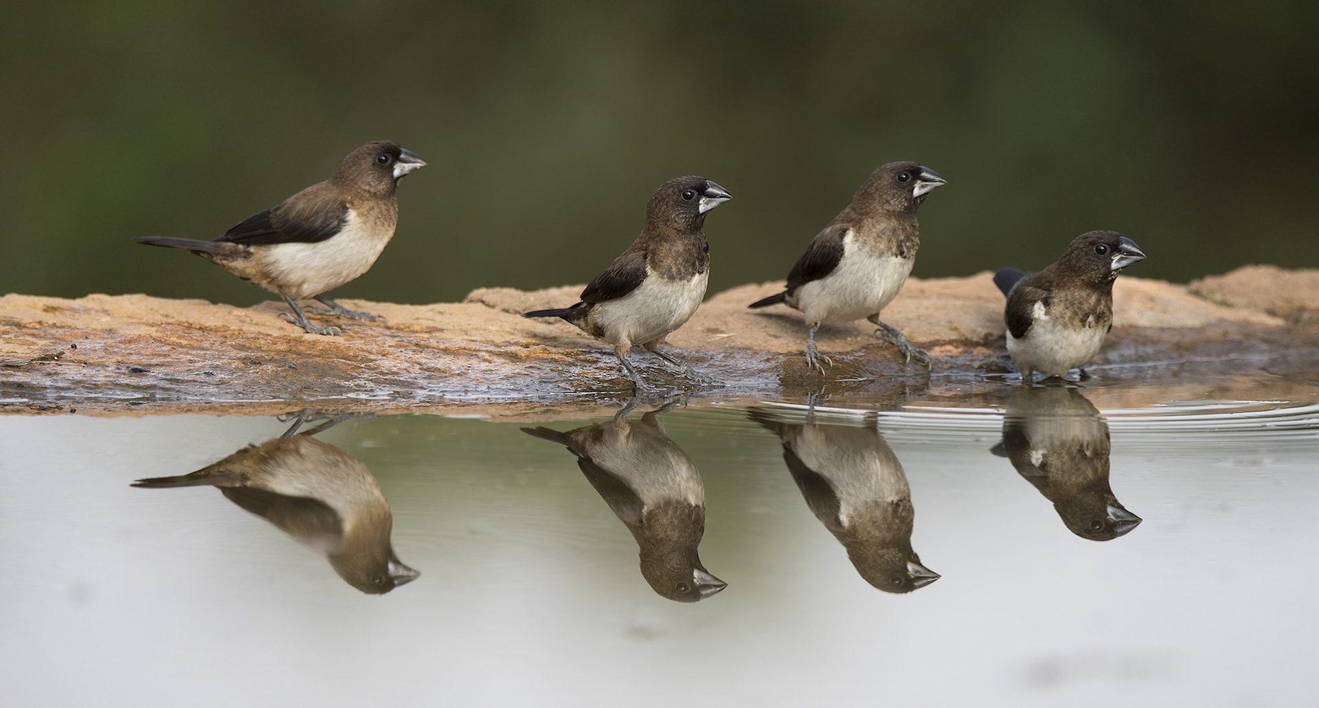 pájaros, reflejos, estanque, agua, picos - Fondos de Pantalla HD - professor-falken.com