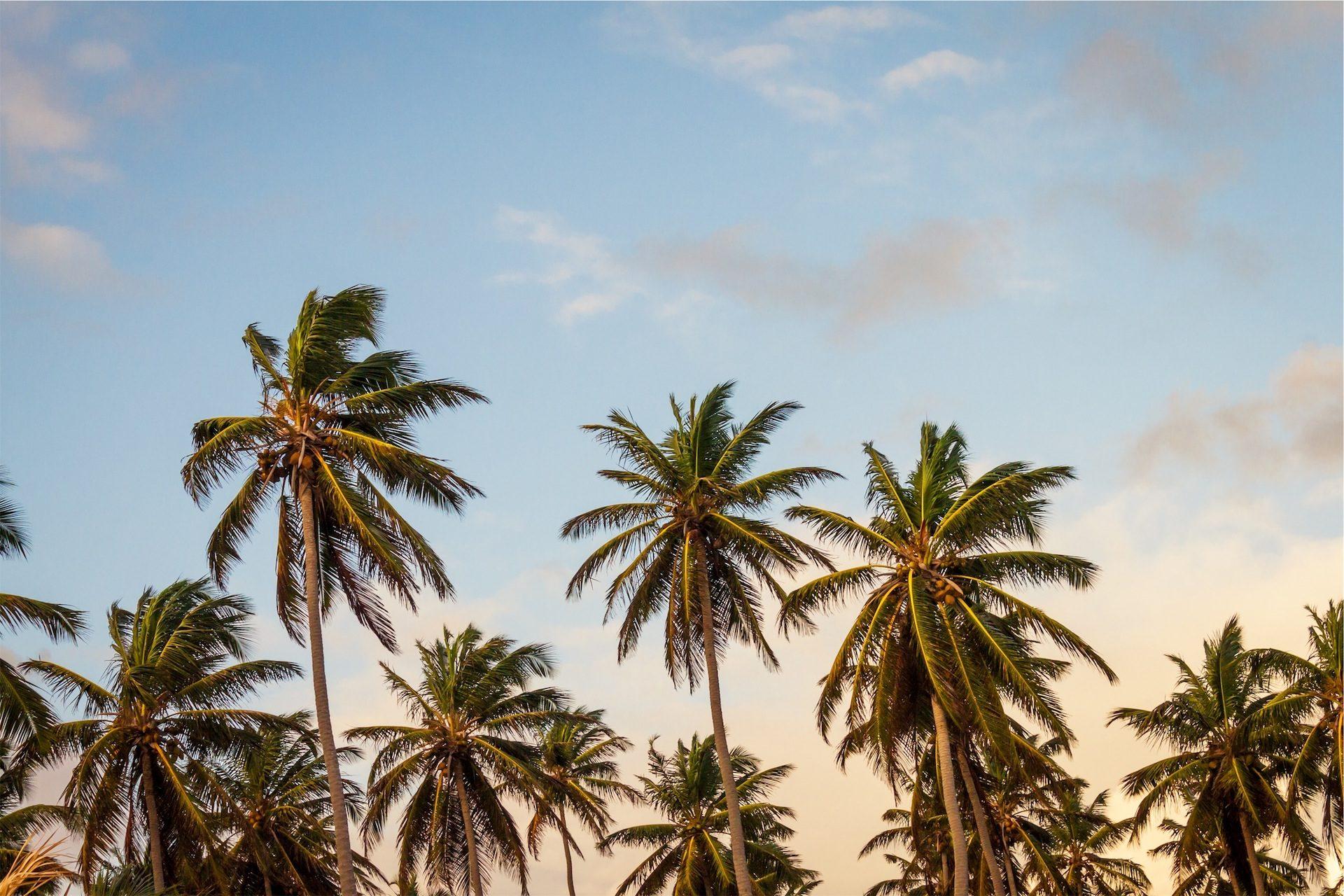 棕榈树, 绿洲, 天空, 云彩, 放松 - 高清壁纸 - 教授-falken.com