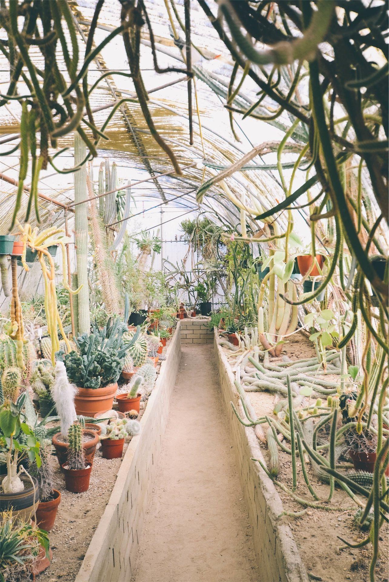 plantas, flores, com efeito de estufa, potenciômetros, cacto - Papéis de parede HD - Professor-falken.com