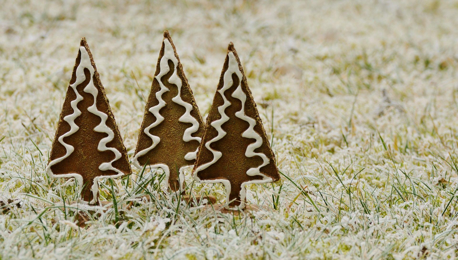 abetos, pinos, hierba, jengibre, navidad - Fondos de Pantalla HD - professor-falken.com