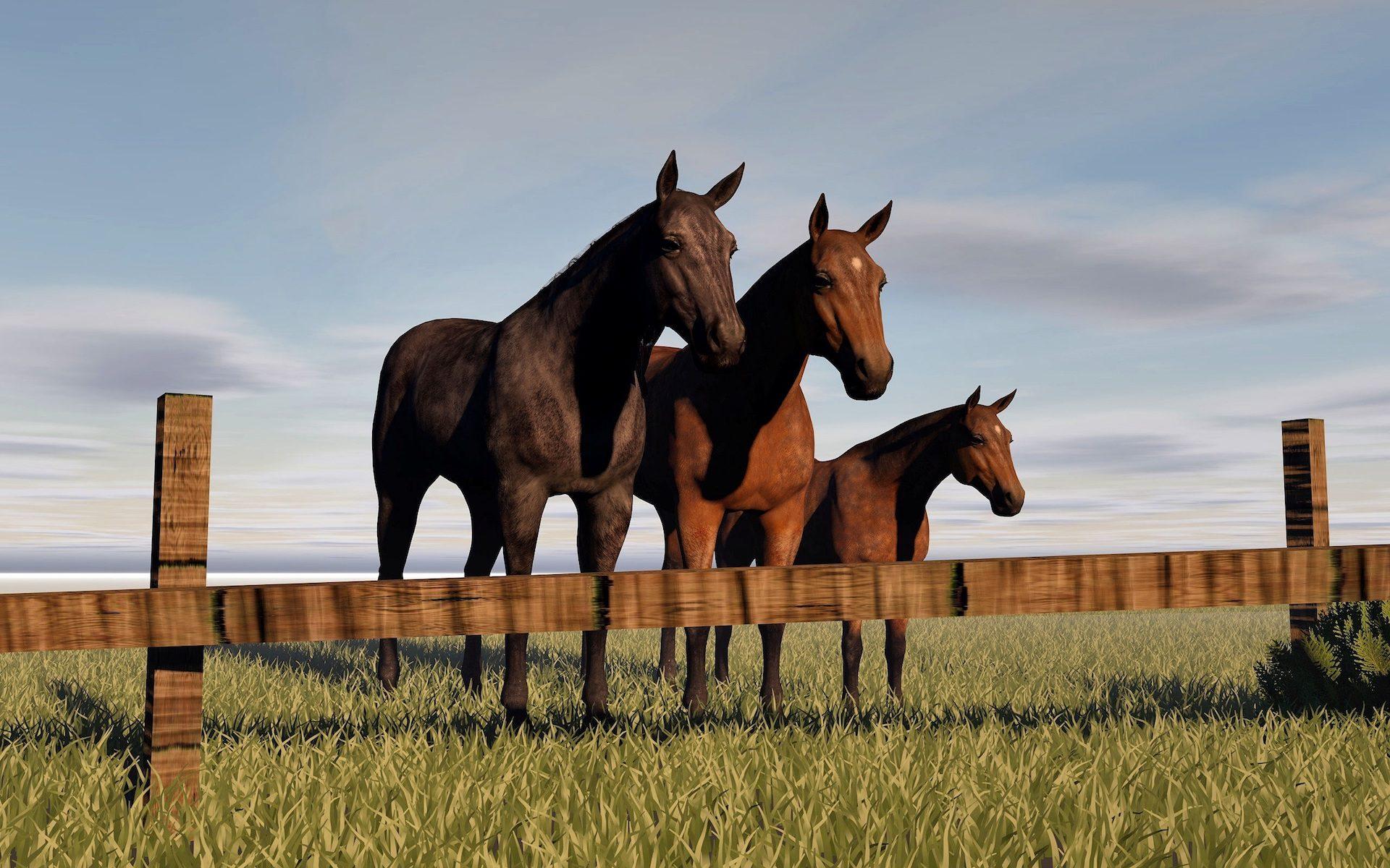 घोड़ों, जोड़े, परिवार, yegua, बछेड़ा, घास, बाड़ - HD वॉलपेपर - प्रोफेसर-falken.com