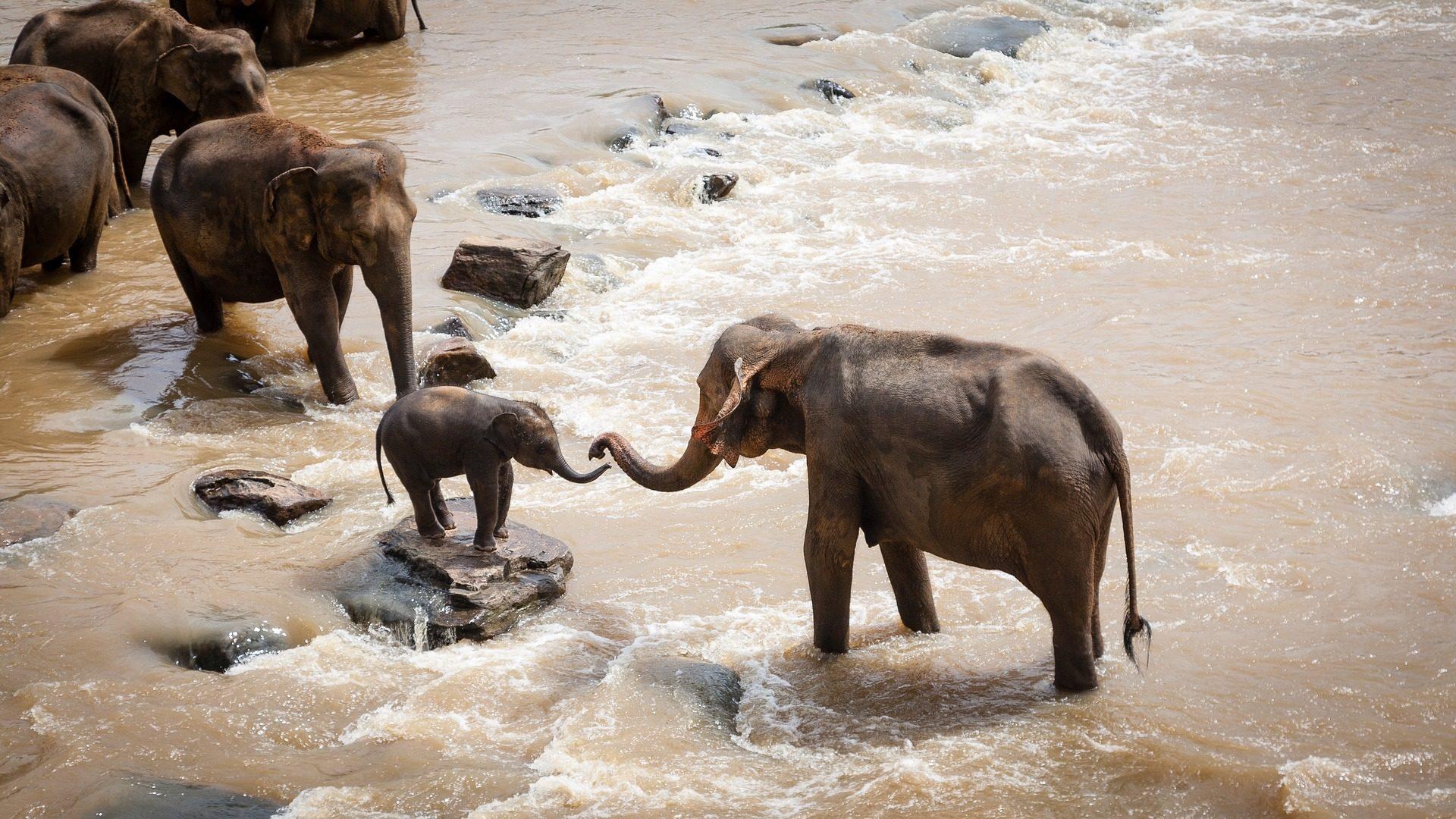 हाथियों, प्रजनन, झुंड, नदी, मदद, जंगली - HD वॉलपेपर - प्रोफेसर-falken.com