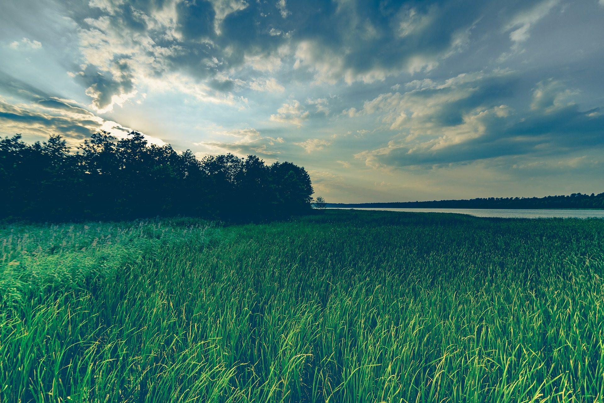 Λίμνη, γρασίδι, δέντρα, Ουρανός, σύννεφα, Mazuria, Πολωνία - Wallpapers HD - Professor-falken.com