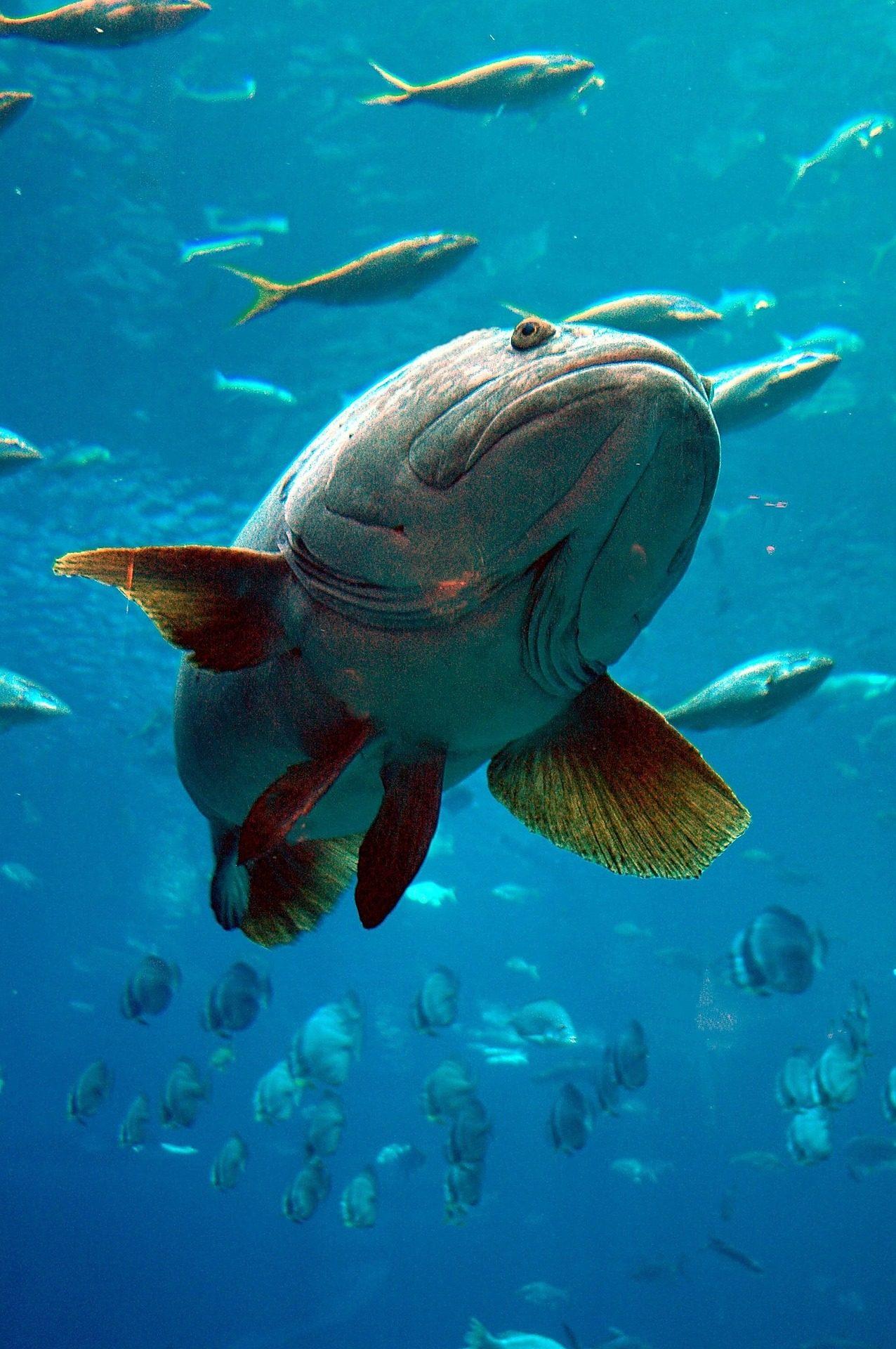 मछली, उष्णकटिबंधीय, मछलीघर, समुद्री जीवन, गिल, पंख - HD वॉलपेपर - प्रोफेसर-falken.com
