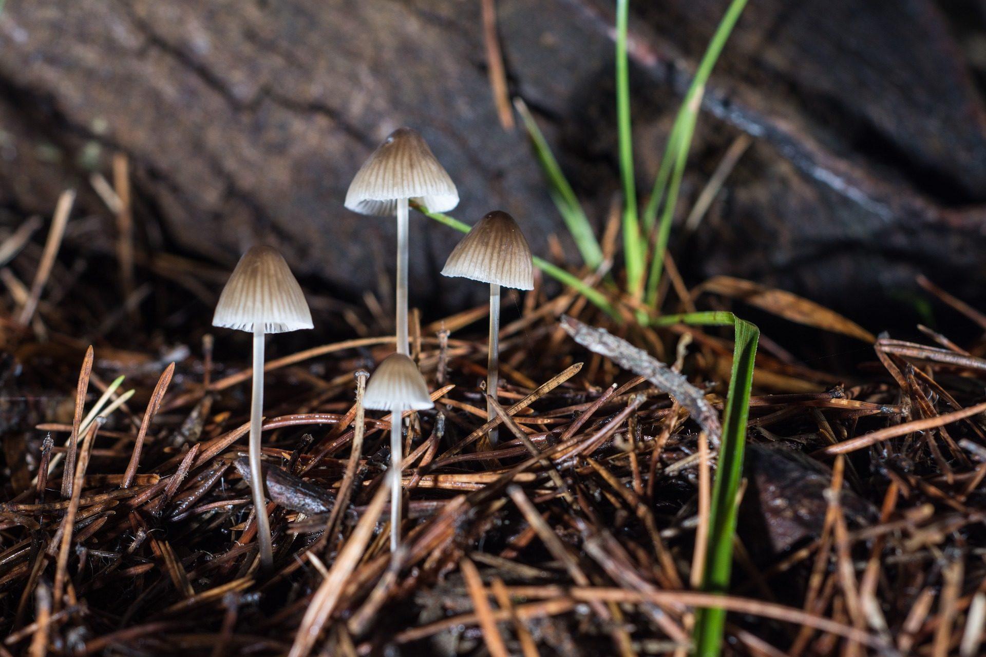 عيش الغراب, الفطريات, العشب, الرطوبة, الخريف - خلفيات عالية الدقة - أستاذ falken.com