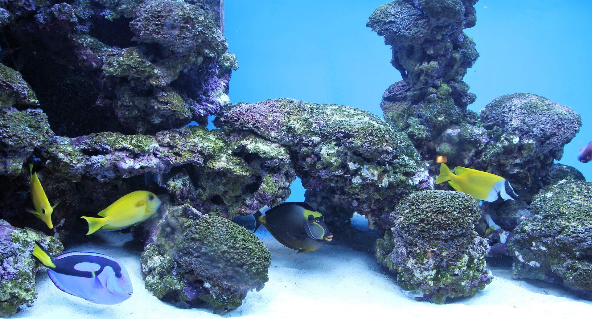 Fondo de pantalla de acuario peces tropicales corales for Peces de pecera