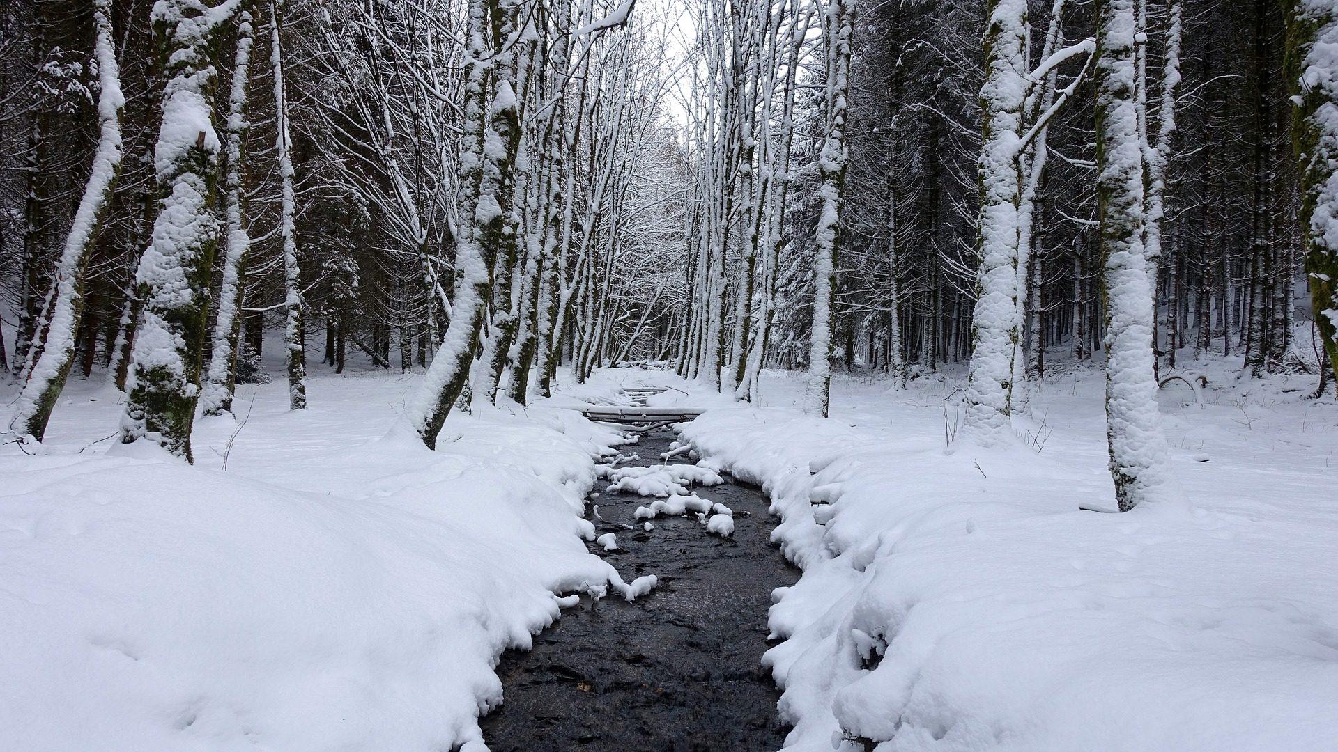 Sfondo foresta neve ice cream alberi acqua inverno for Sfondi gratis desktop inverno