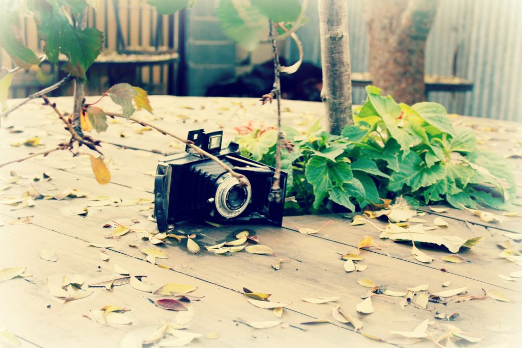 cámara, fotografía, antigua, vintage, hojas, secas, 1701301453