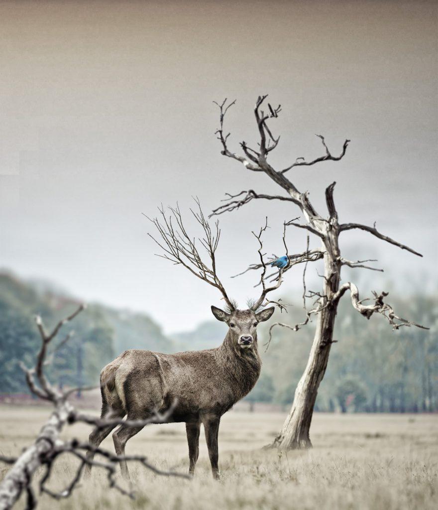 ciervo, prado, bosque, cuernos, árbol, salvaje, libertad, 1701182355