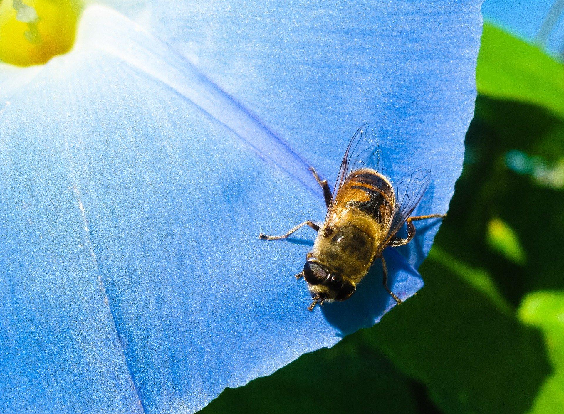 蜜蜂, 花, 昆虫, 眼睛, 地面层 - 高清壁纸 - 教授-falken.com