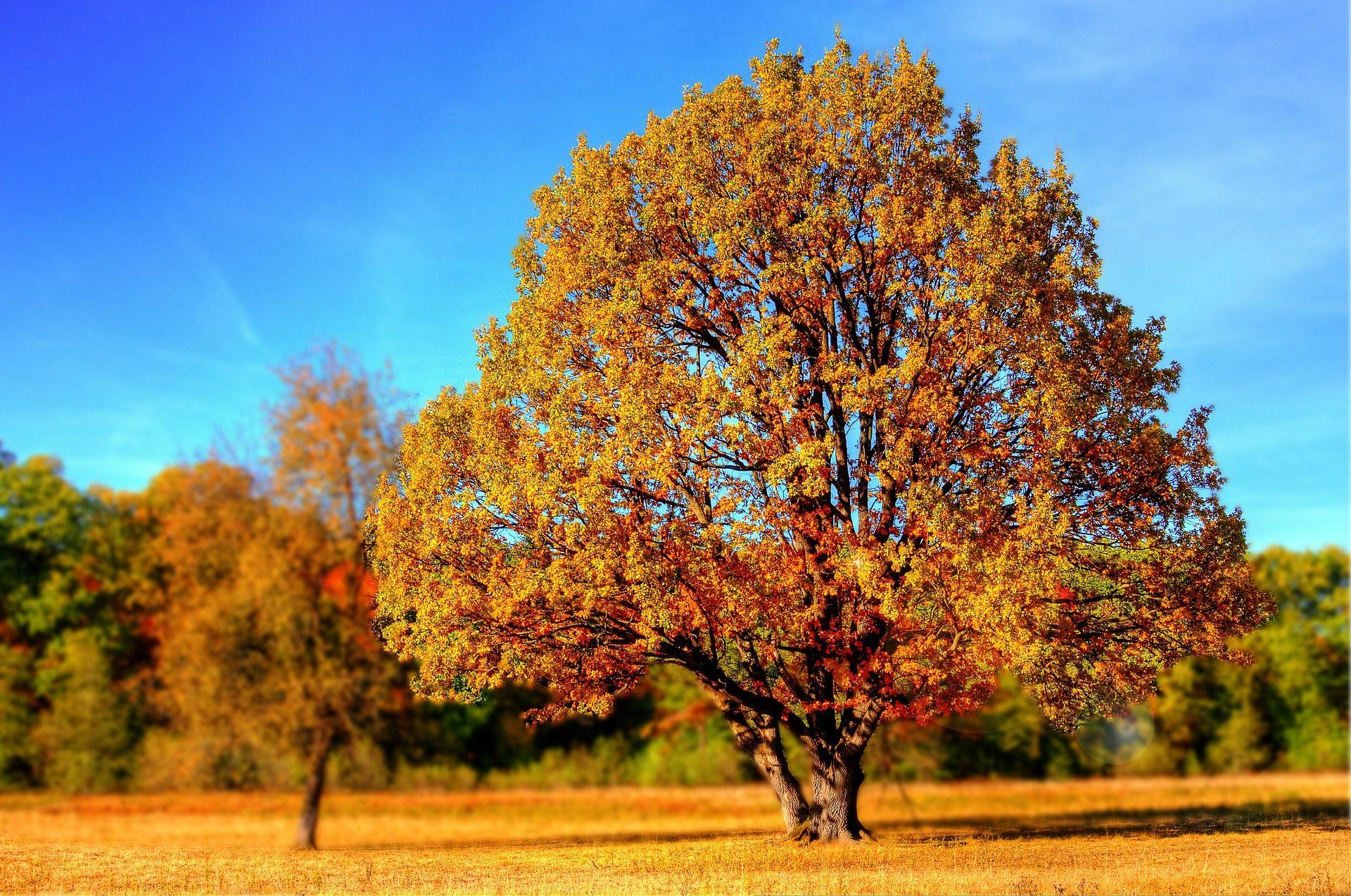 树, 森林, 秋天, 叶子, 落叶, 多拉多 - 高清壁纸 - 教授-falken.com