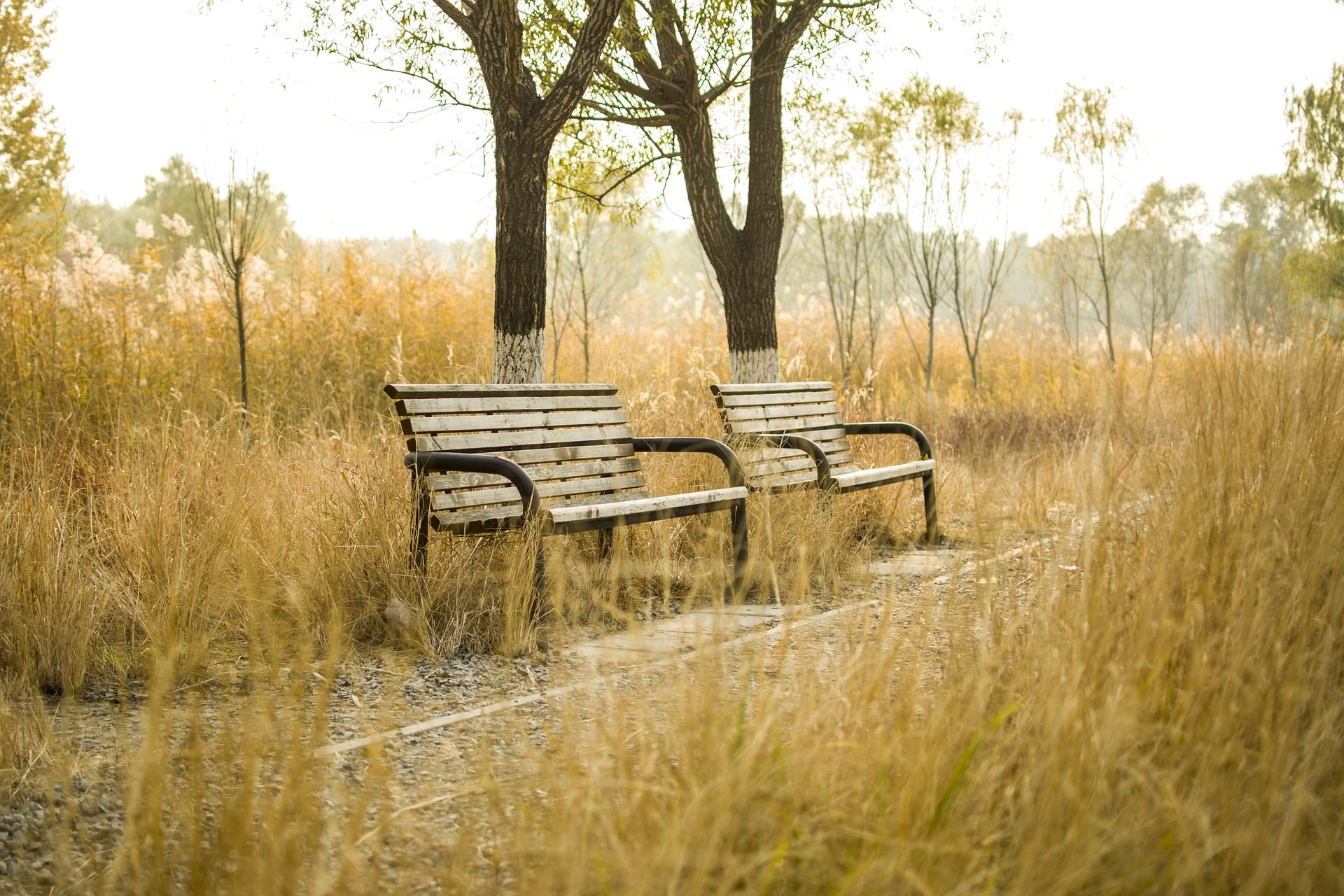 bancos, parque, camino, pasto, madera, otoño, árboles - Fondos de Pantalla HD - professor-falken.com
