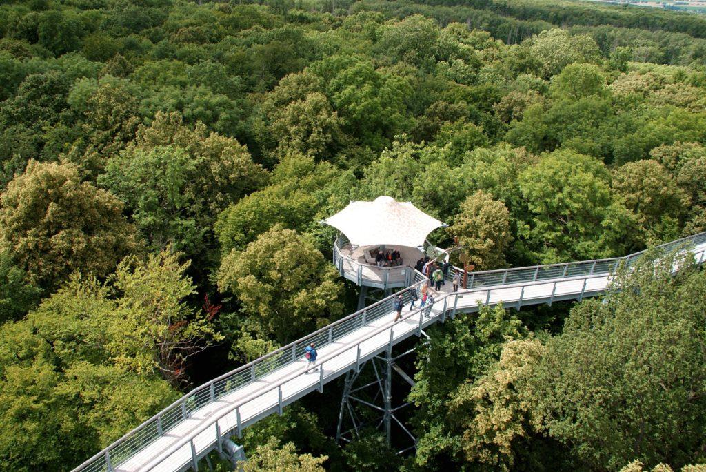 bosque, árboles, pasaje, elevado, mirador, turingia, alemania, 1702161543