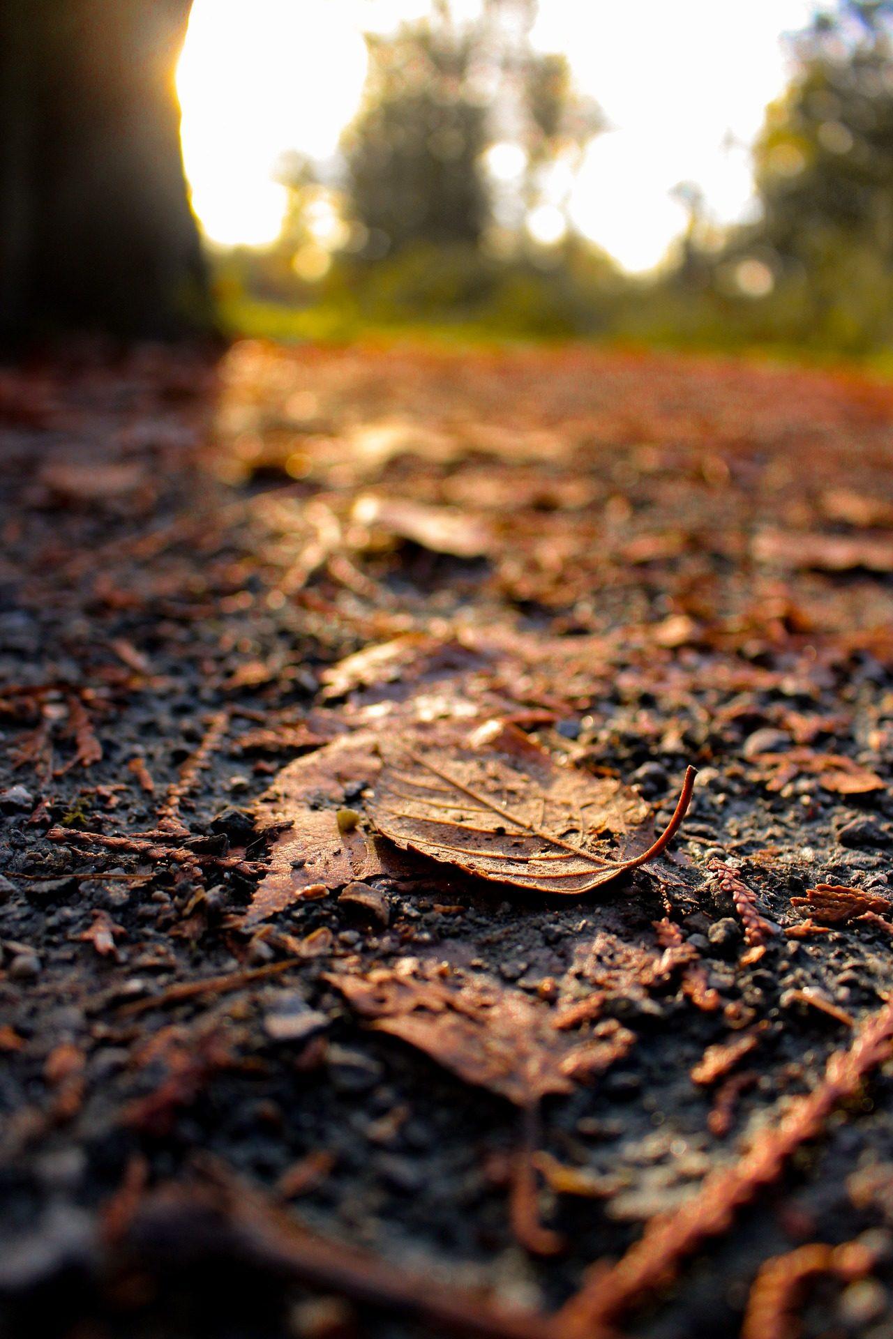 campo, solo, folhas, seca, Pôr do sol, Outono - Papéis de parede HD - Professor-falken.com