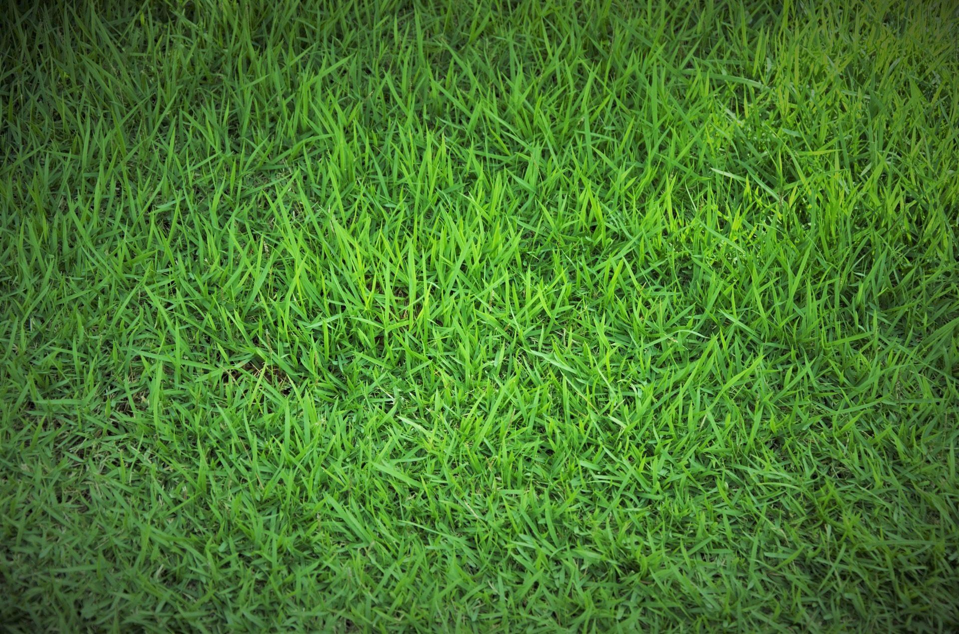 Fondo de pantalla de cesped hierba frondoso alfombra for Hierba jardin