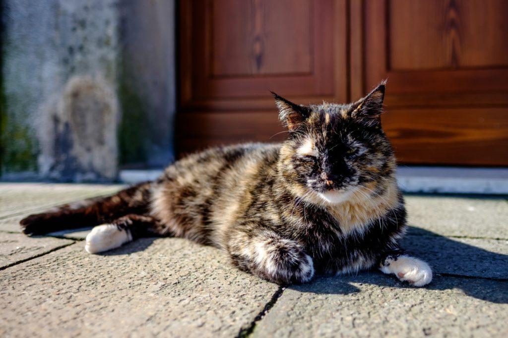 gato, mascota, felino, dormido, descanso, 1702132046