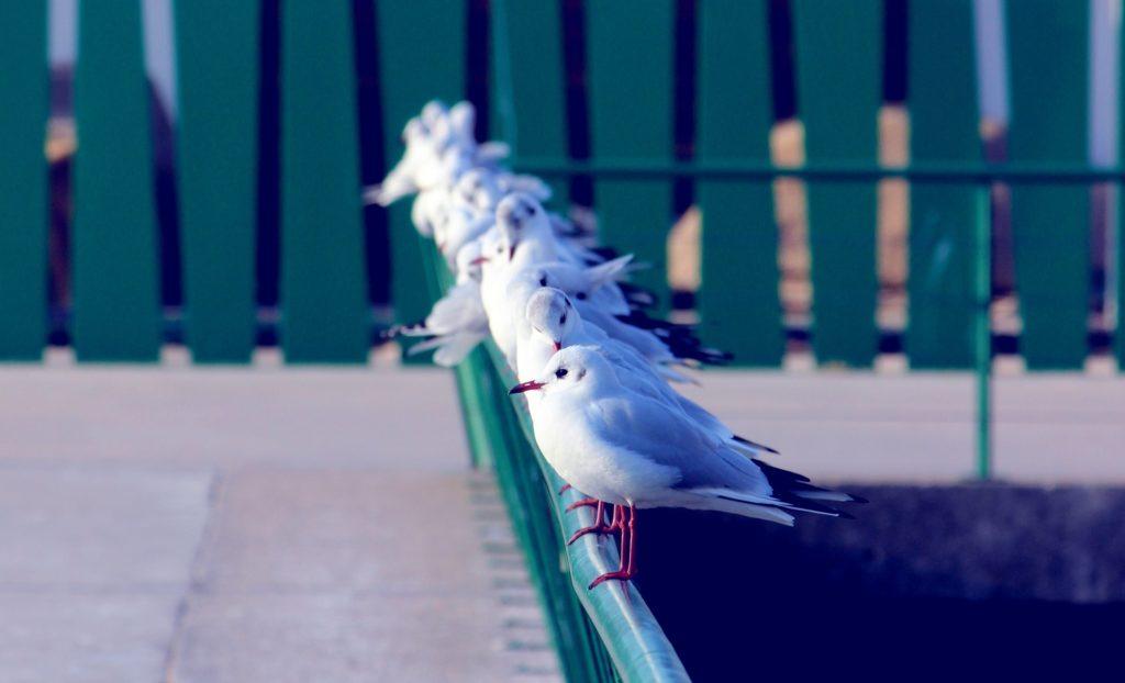 gaviotas, aves, pájaros, bandada, posadas, 1702172023