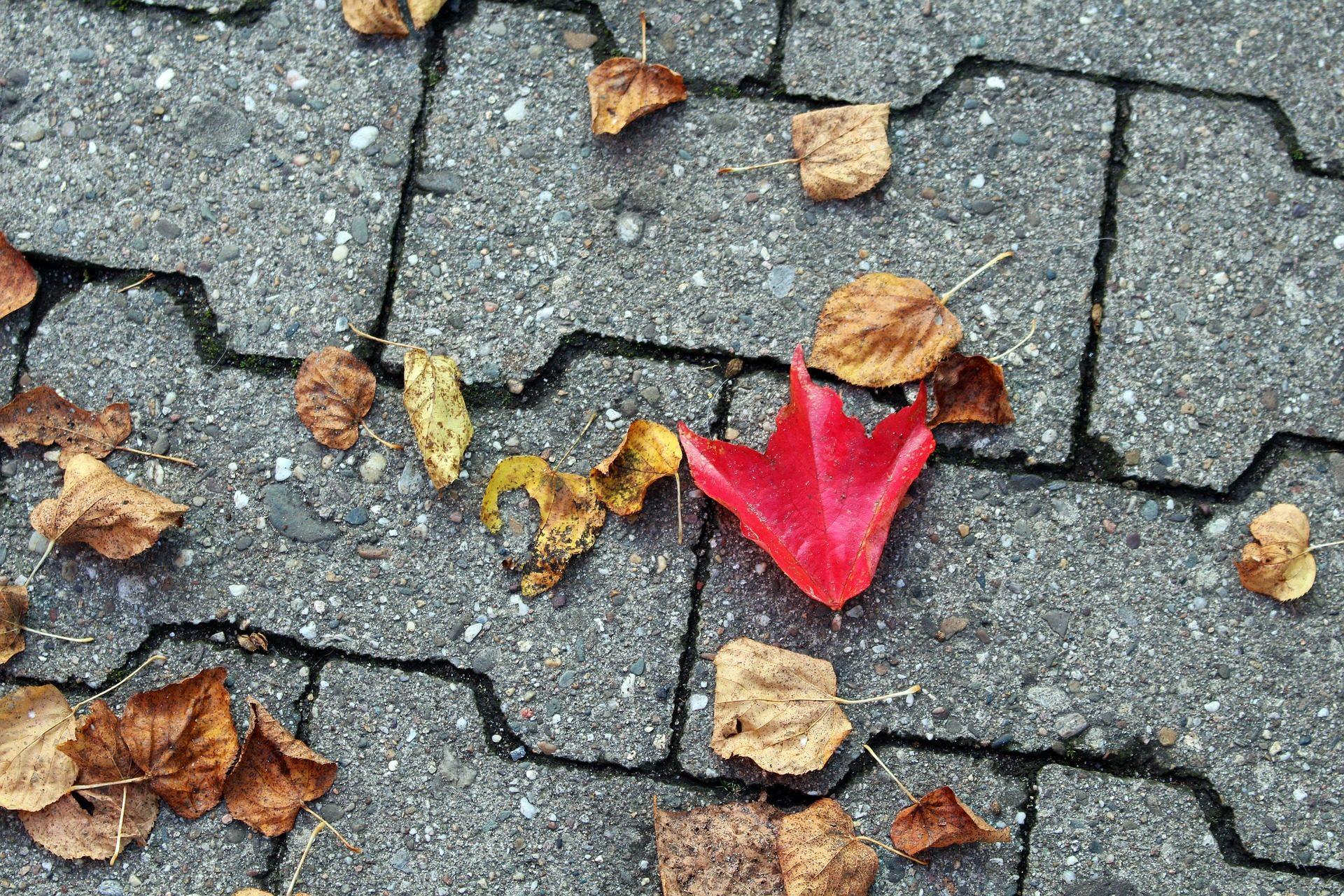 feuilles, sec, sol, automne, feuilles caduques, asphalte - Fonds d'écran HD - Professor-falken.com
